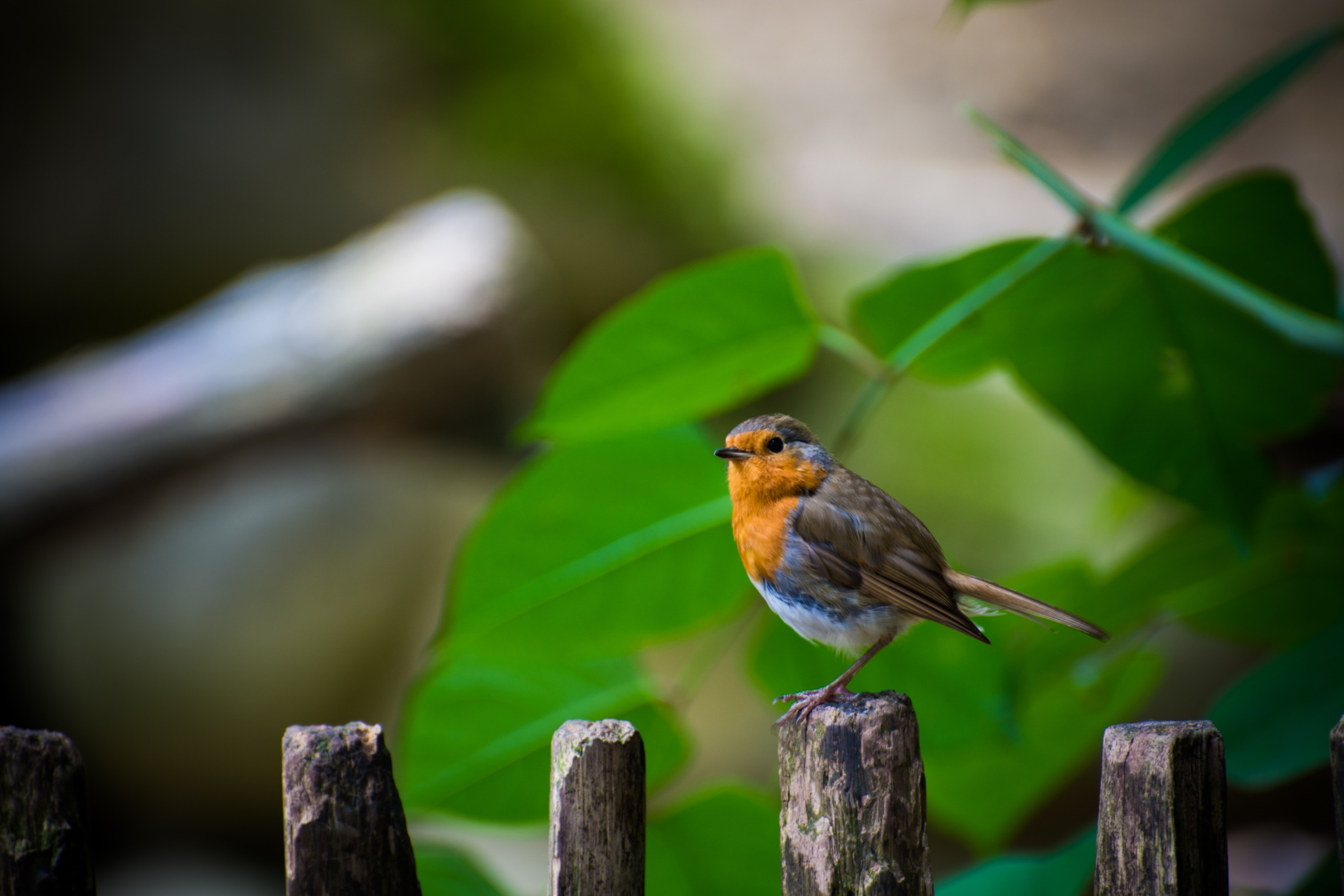 Birdy by ErikW