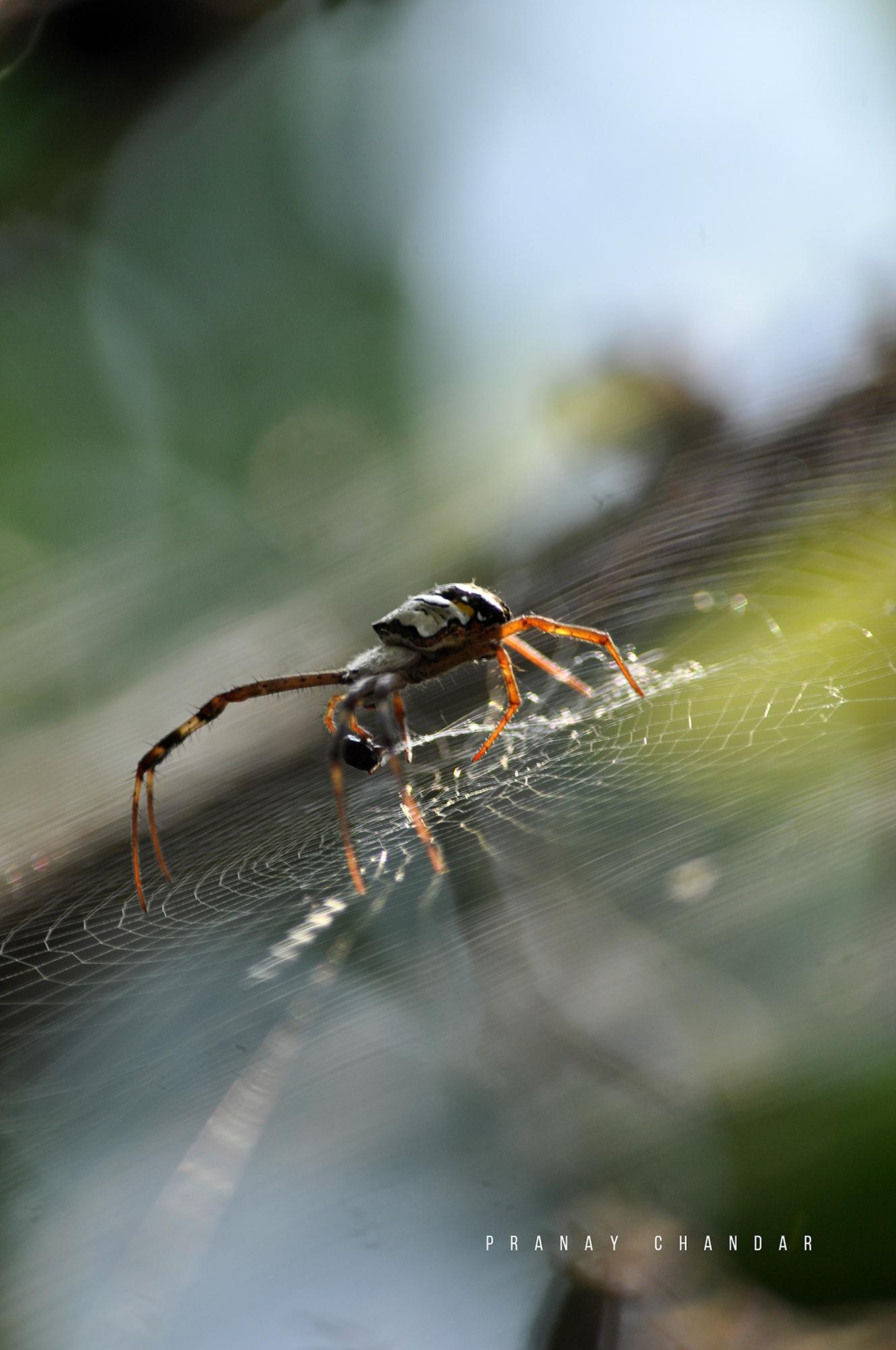 Spider game by rameshchandarr