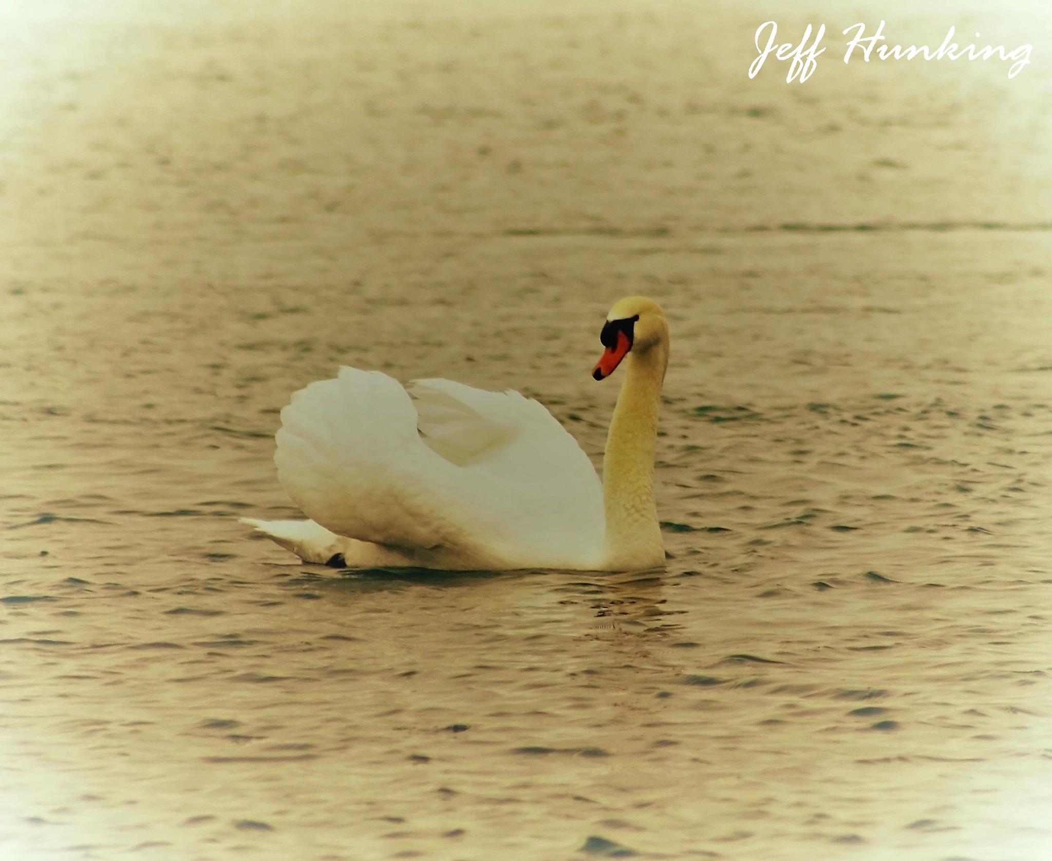 Swan lake. by itsjustmynature