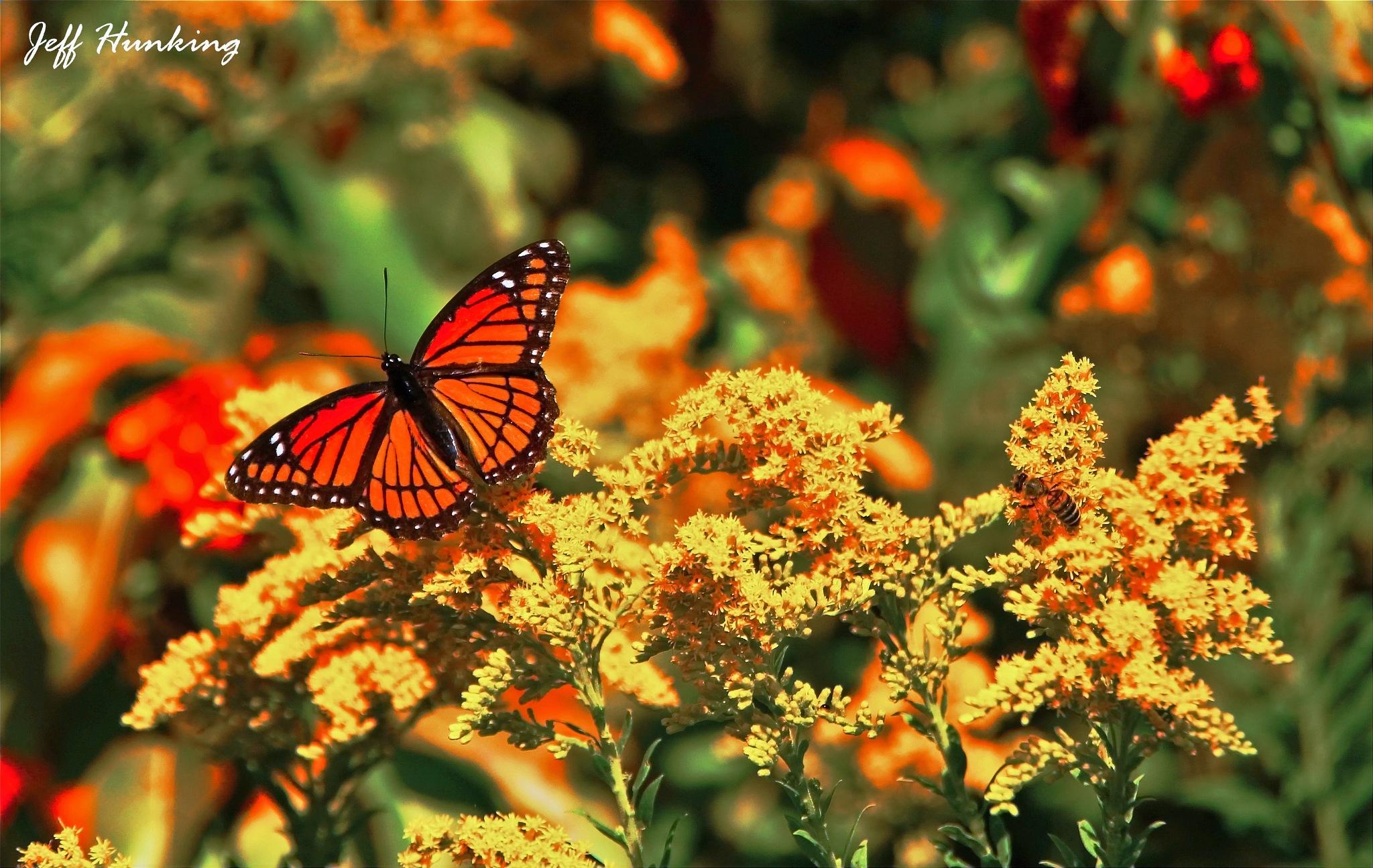 Butterfly by itsjustmynature