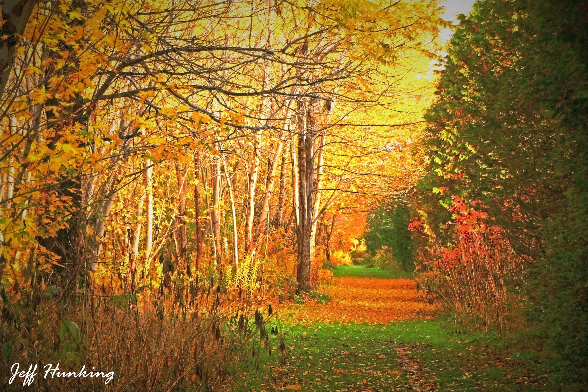 November stroll. by itsjustmynature