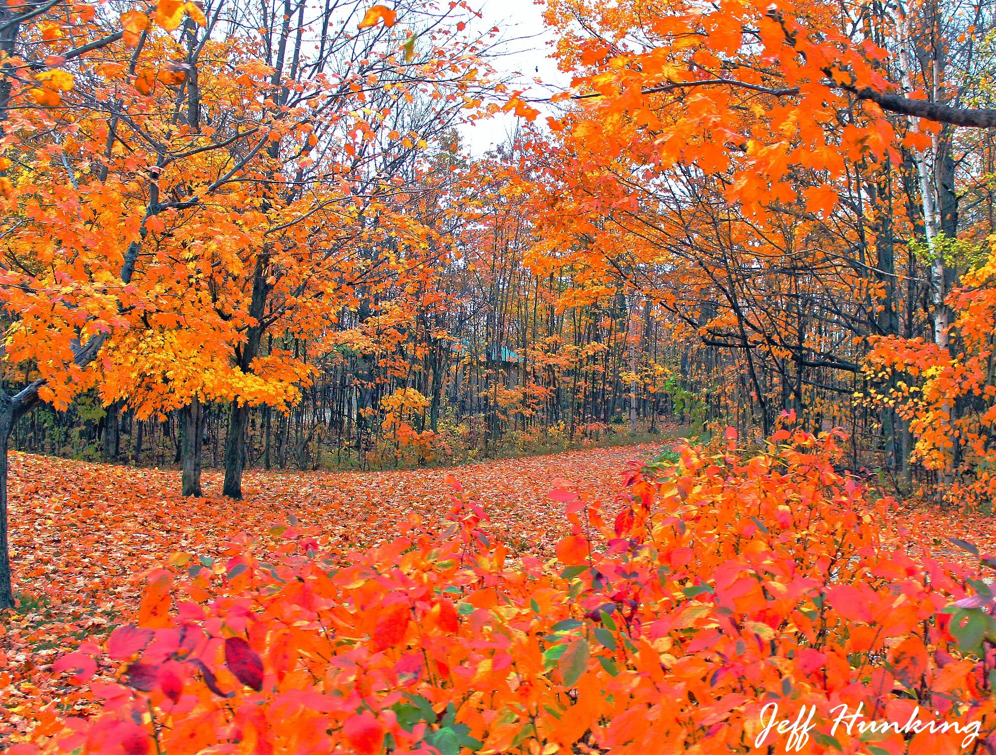 Colourful carpet. by itsjustmynature