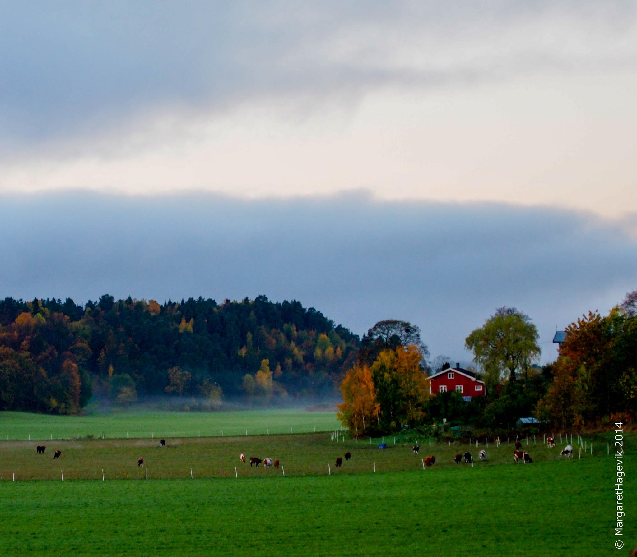 Green pastures in the morning by Margaret Brynildsen Hagevik