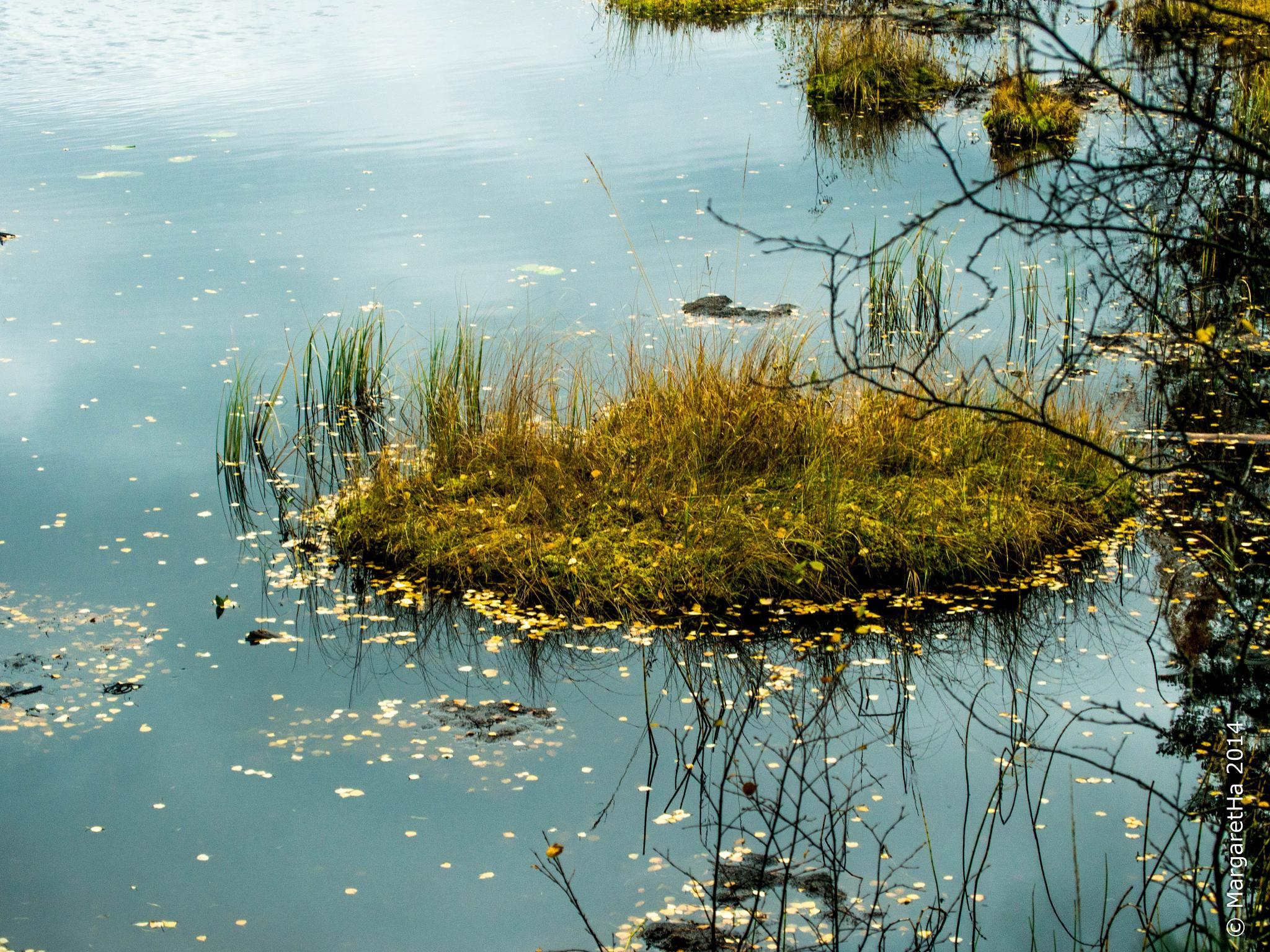 The pond by Margaret Brynildsen Hagevik