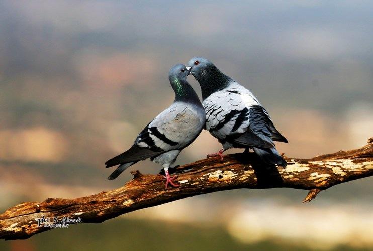 Love by al-Saadi