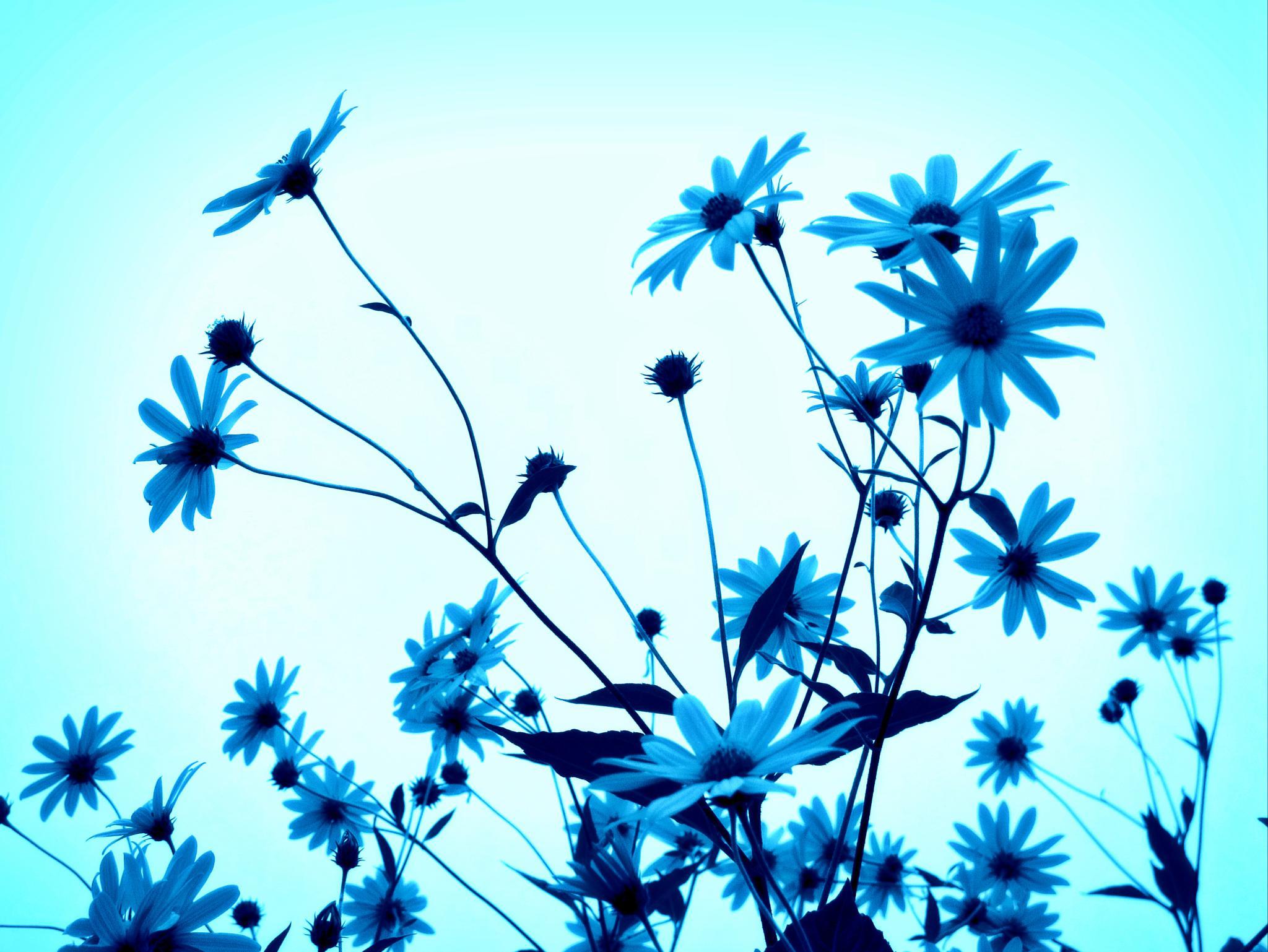 azul by angelgarcia