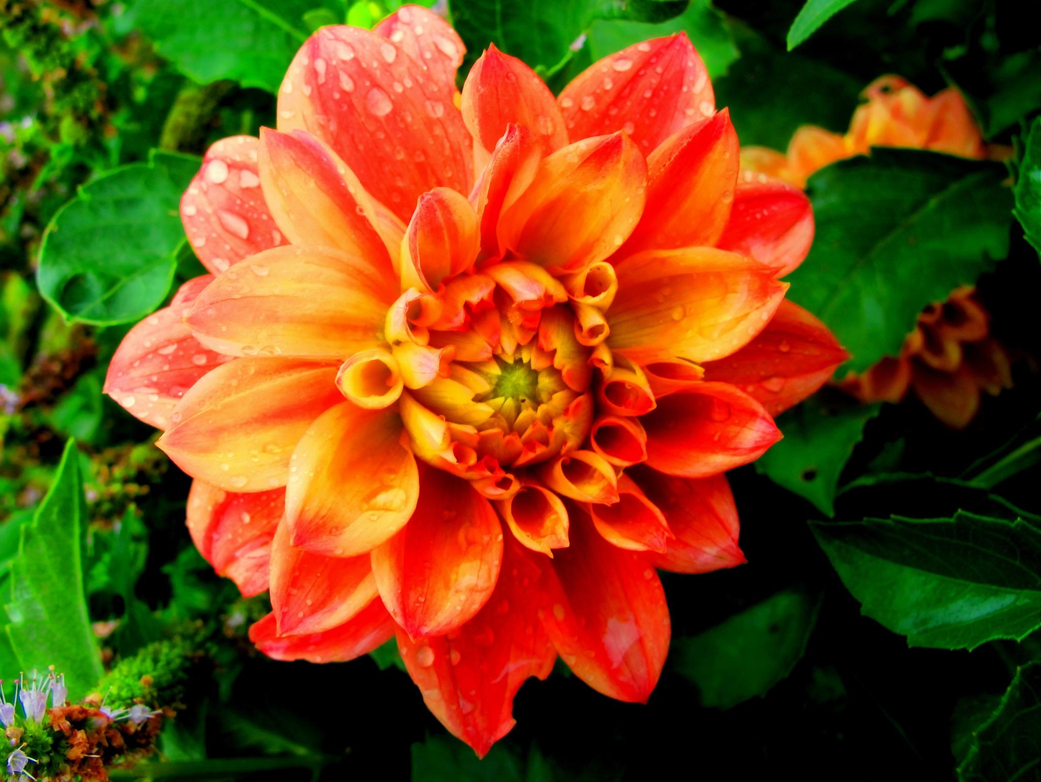 color por marivi by angelgarcia