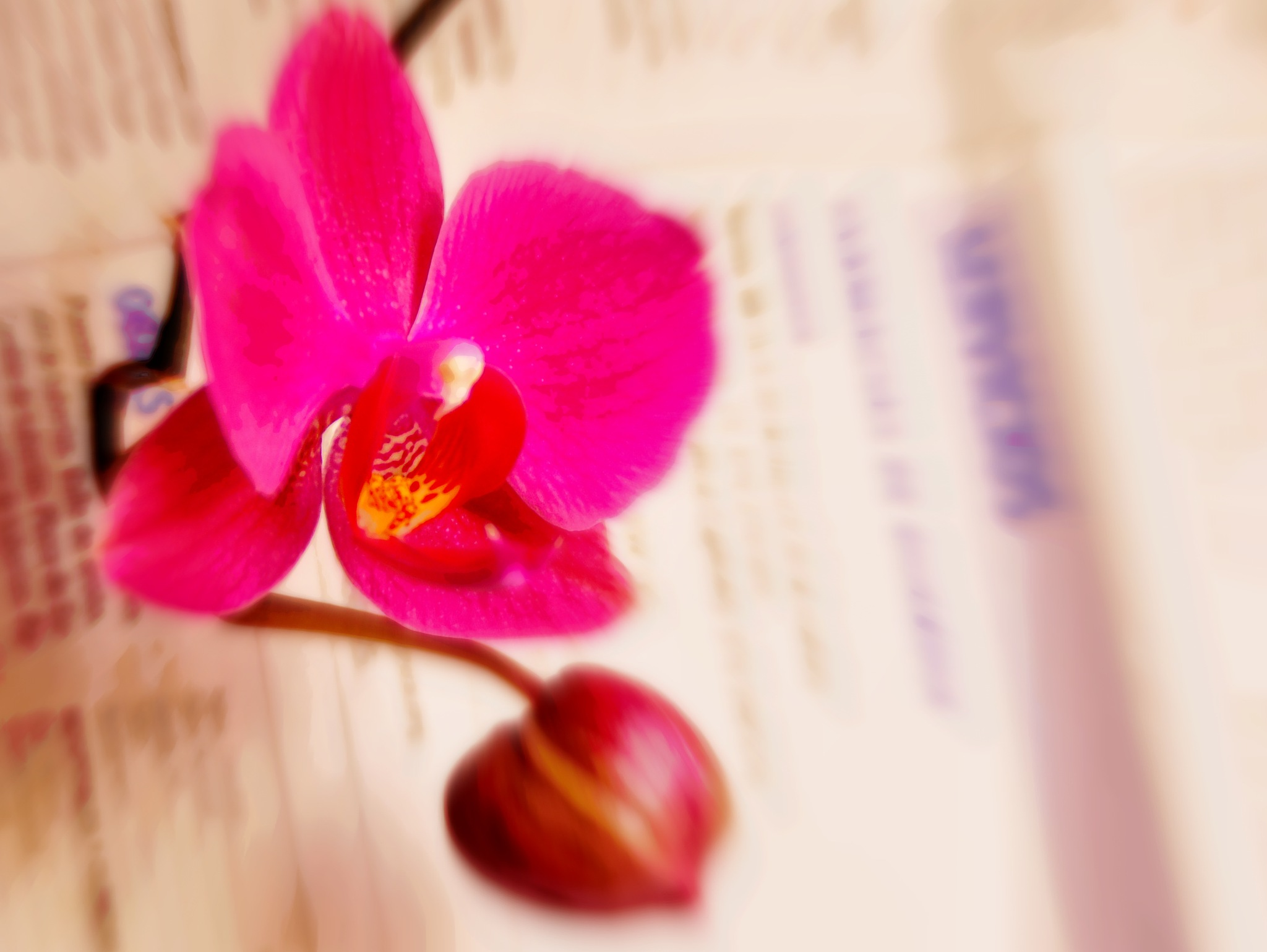 lectora rosa by angelgarcia