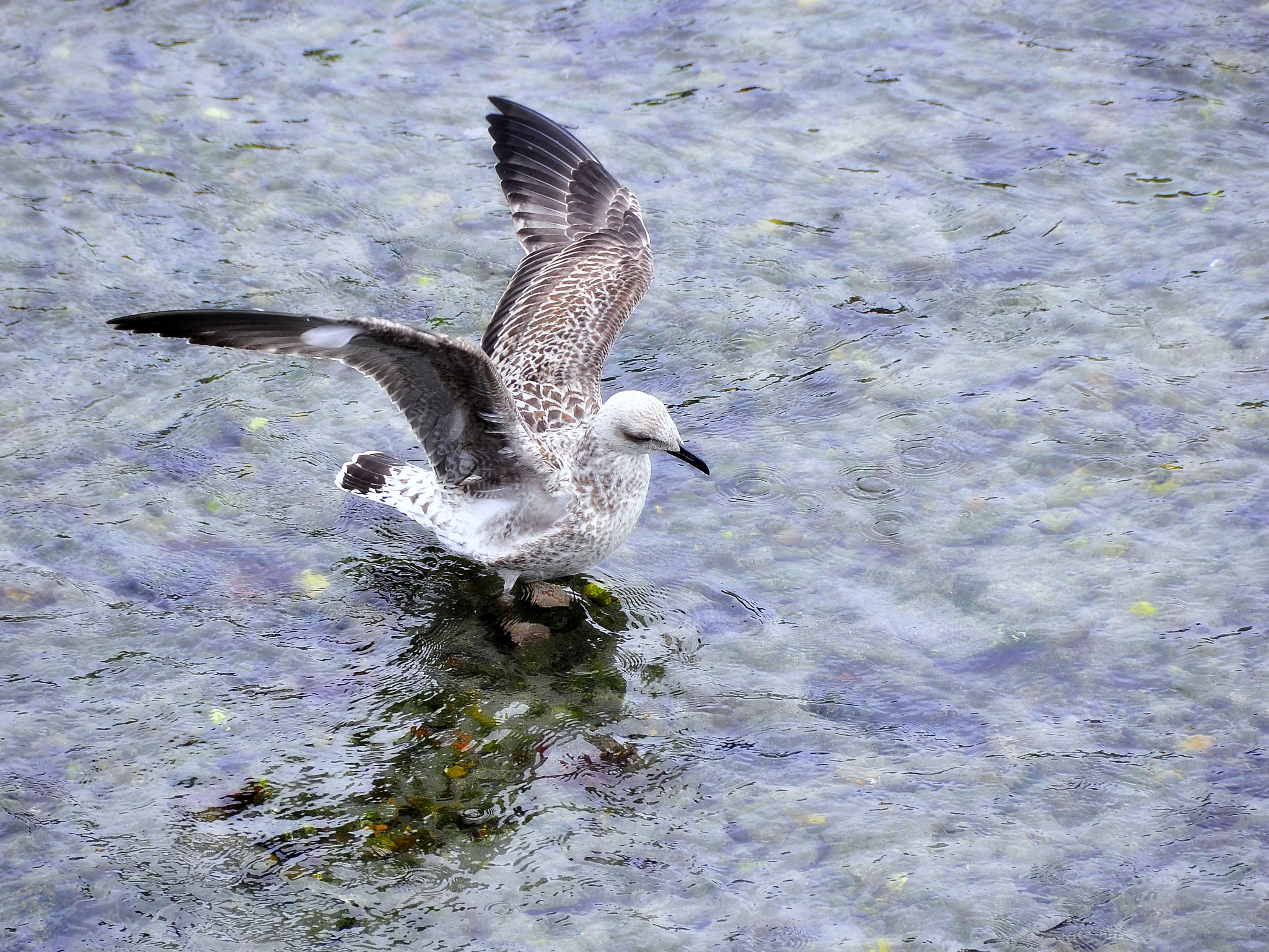 vuelo by angelgarcia