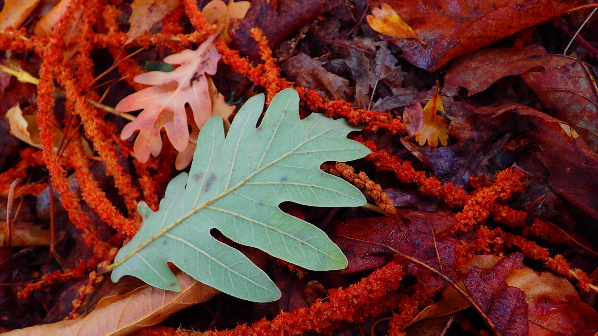 otoño by angelgarcia