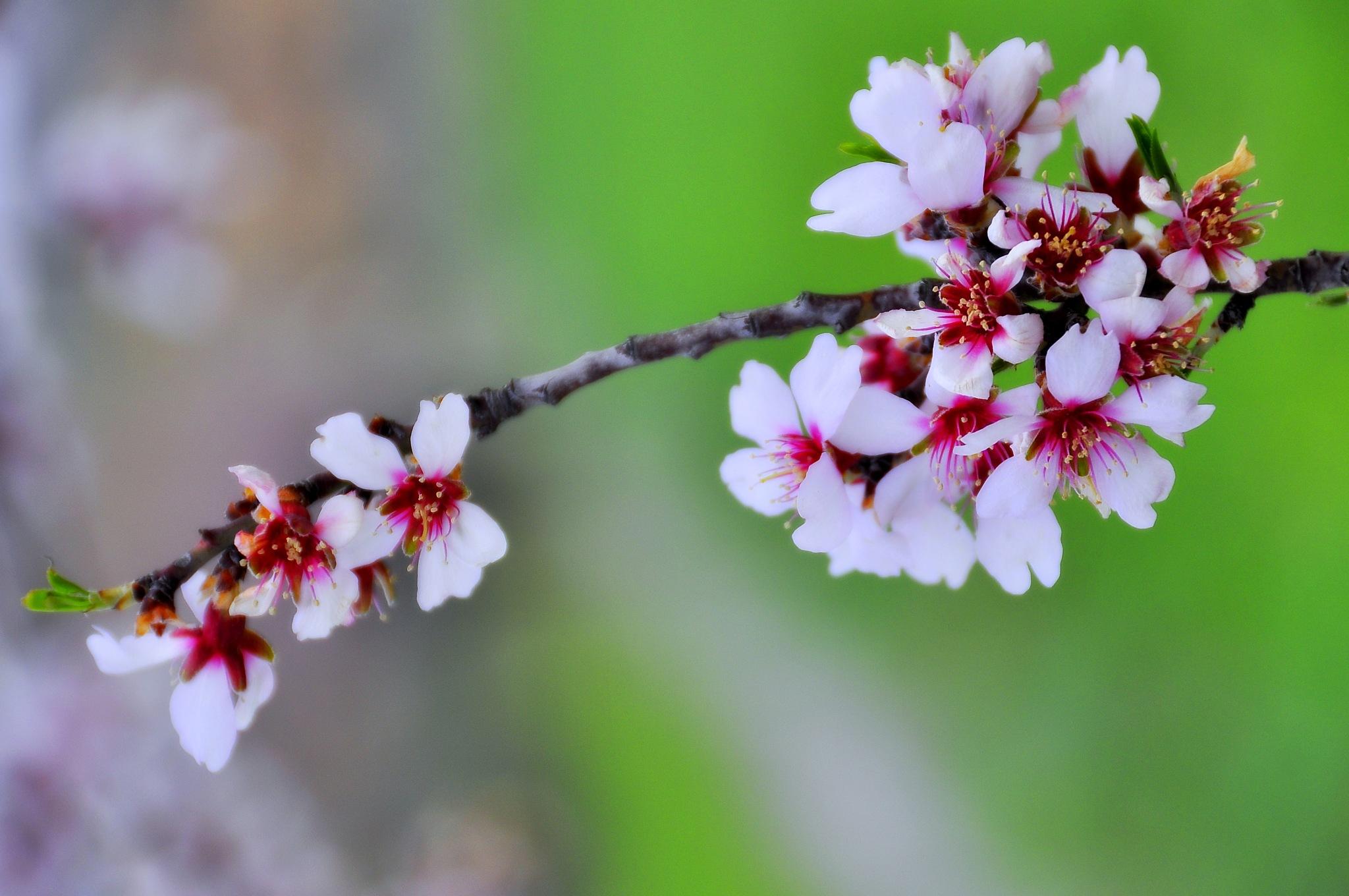 primavera by angelgarcia