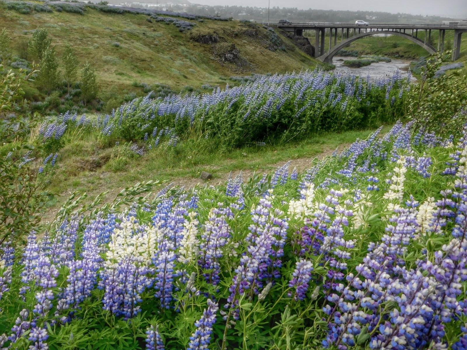 Near Reykjavik Iceland by Sheila Button