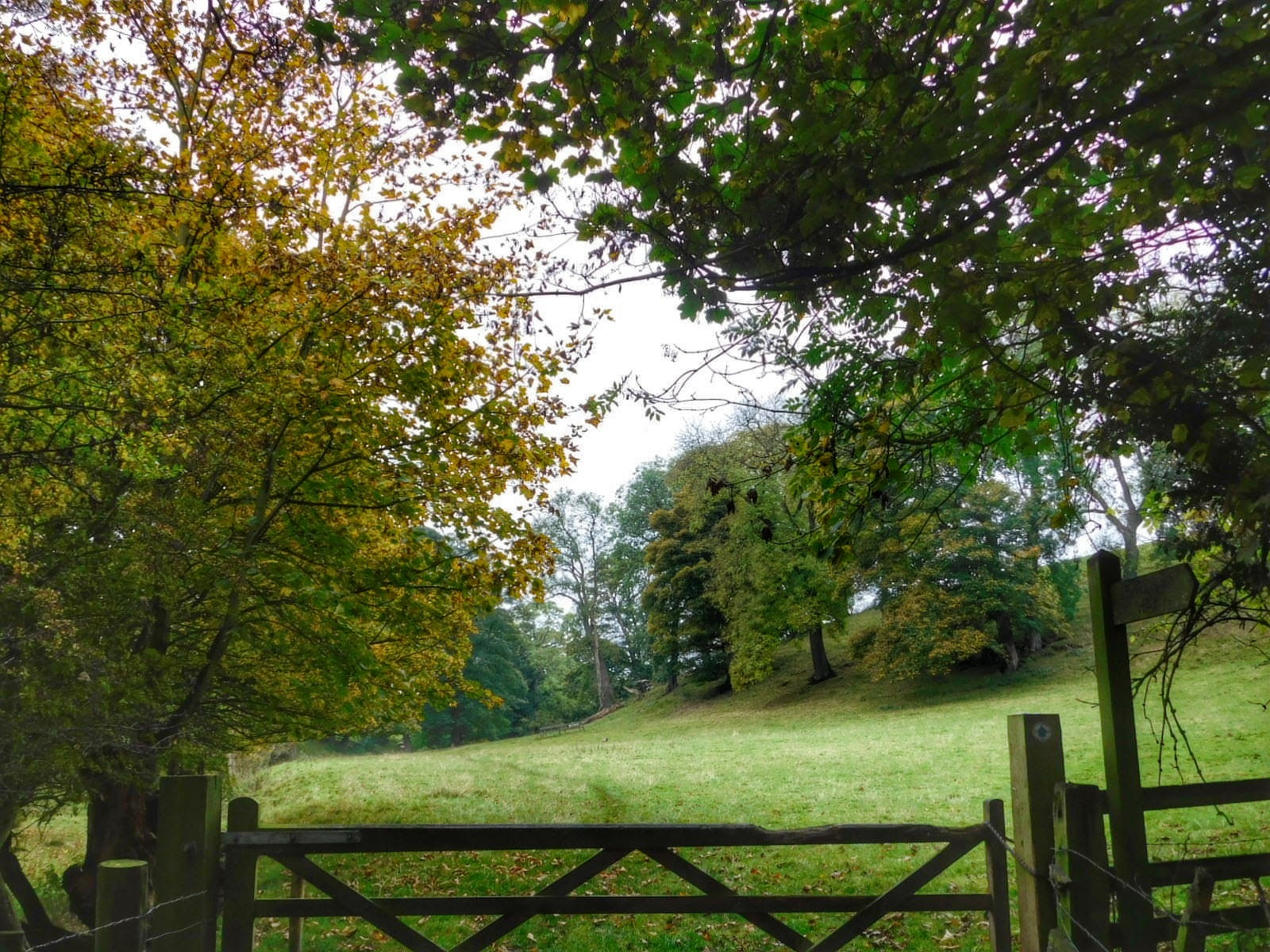 A walk in North Grimston, North Yorkshire, UK on Sunday  by Sheila Button