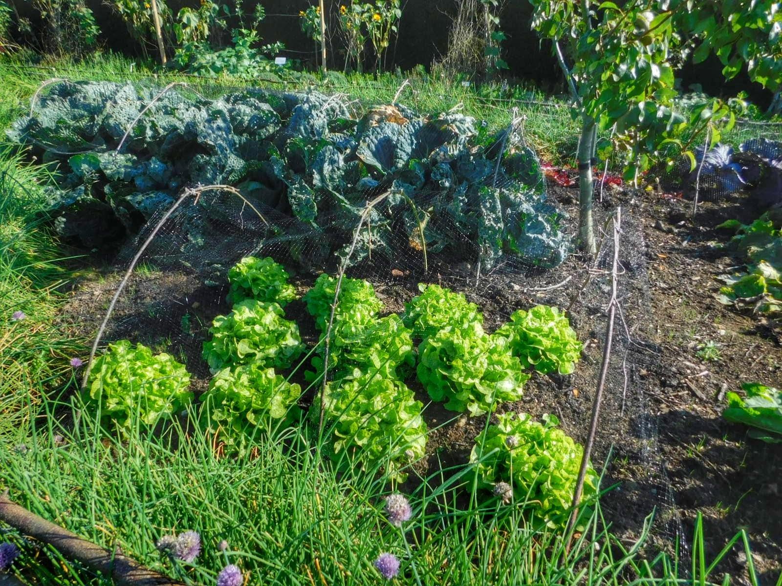 The Vegetable Garden, Castle Howard, near York UK - September visit  by Sheila Button