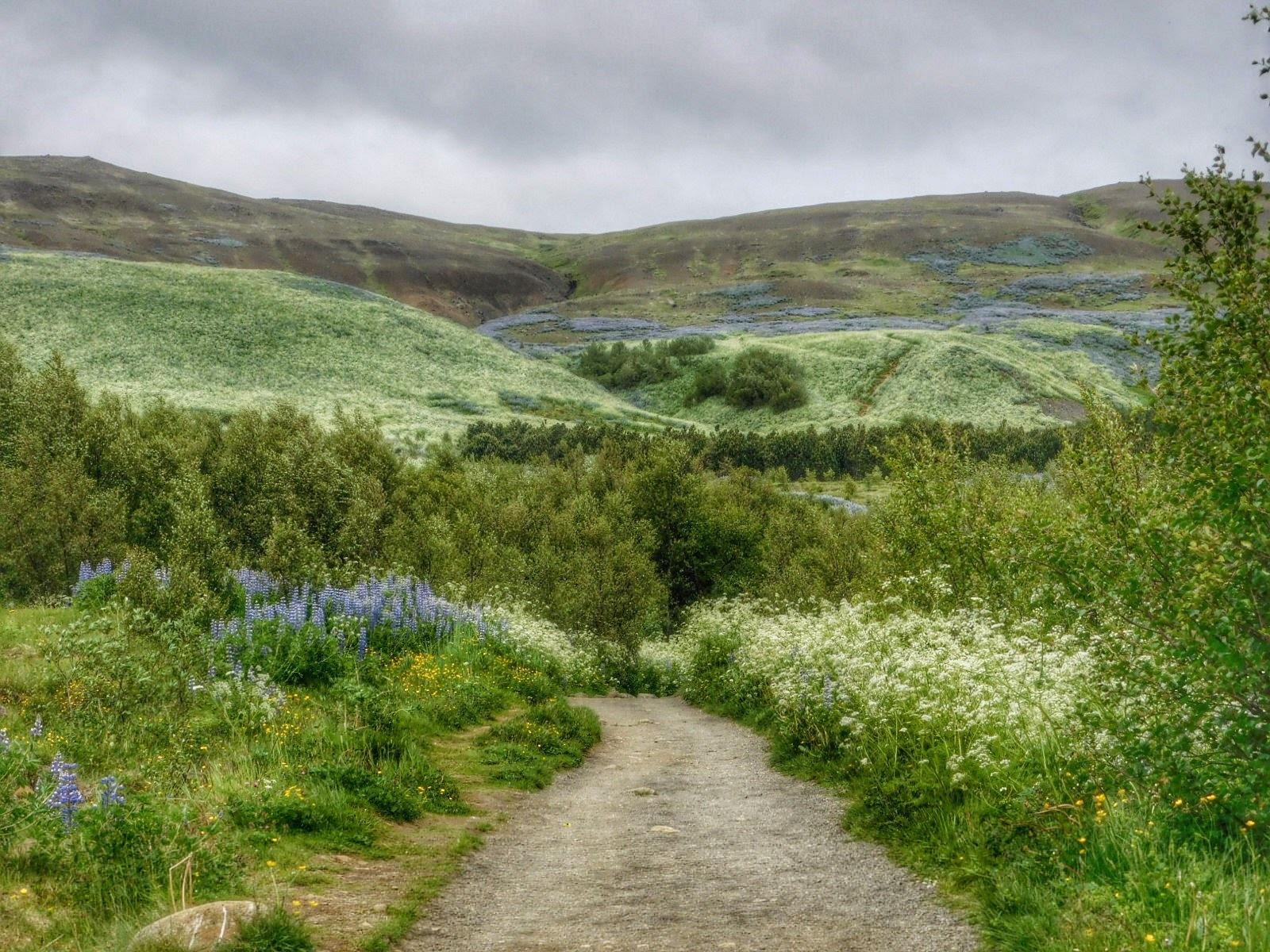Iceland - near Reykjavik by Sheila Button