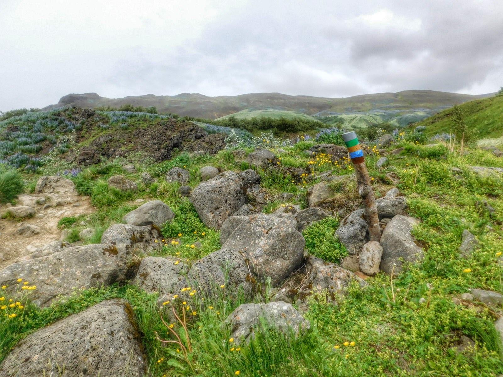 Near Reykjavik, Iceland  by Sheila Button