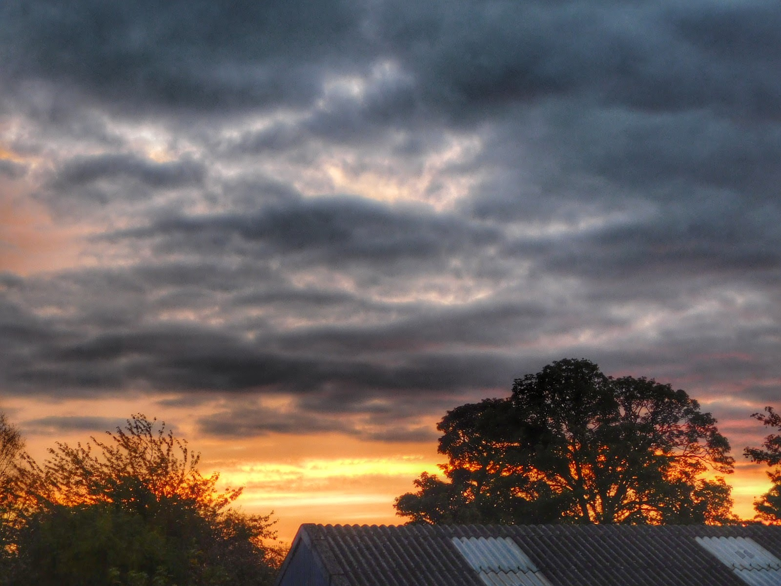 Thursday Morning from my window, Beverley, UK by Sheila Button