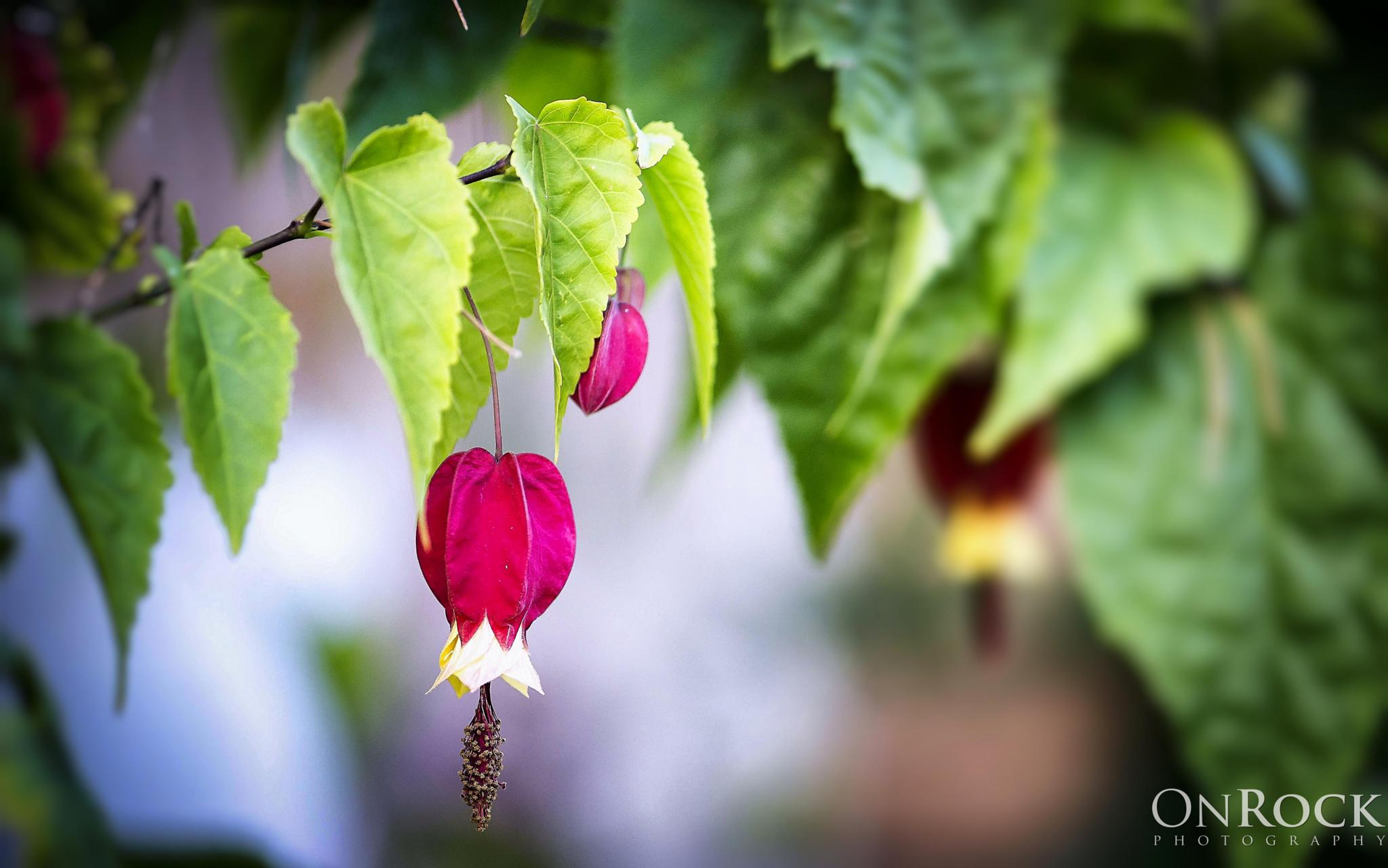 Flower Bell by OnRock Photography
