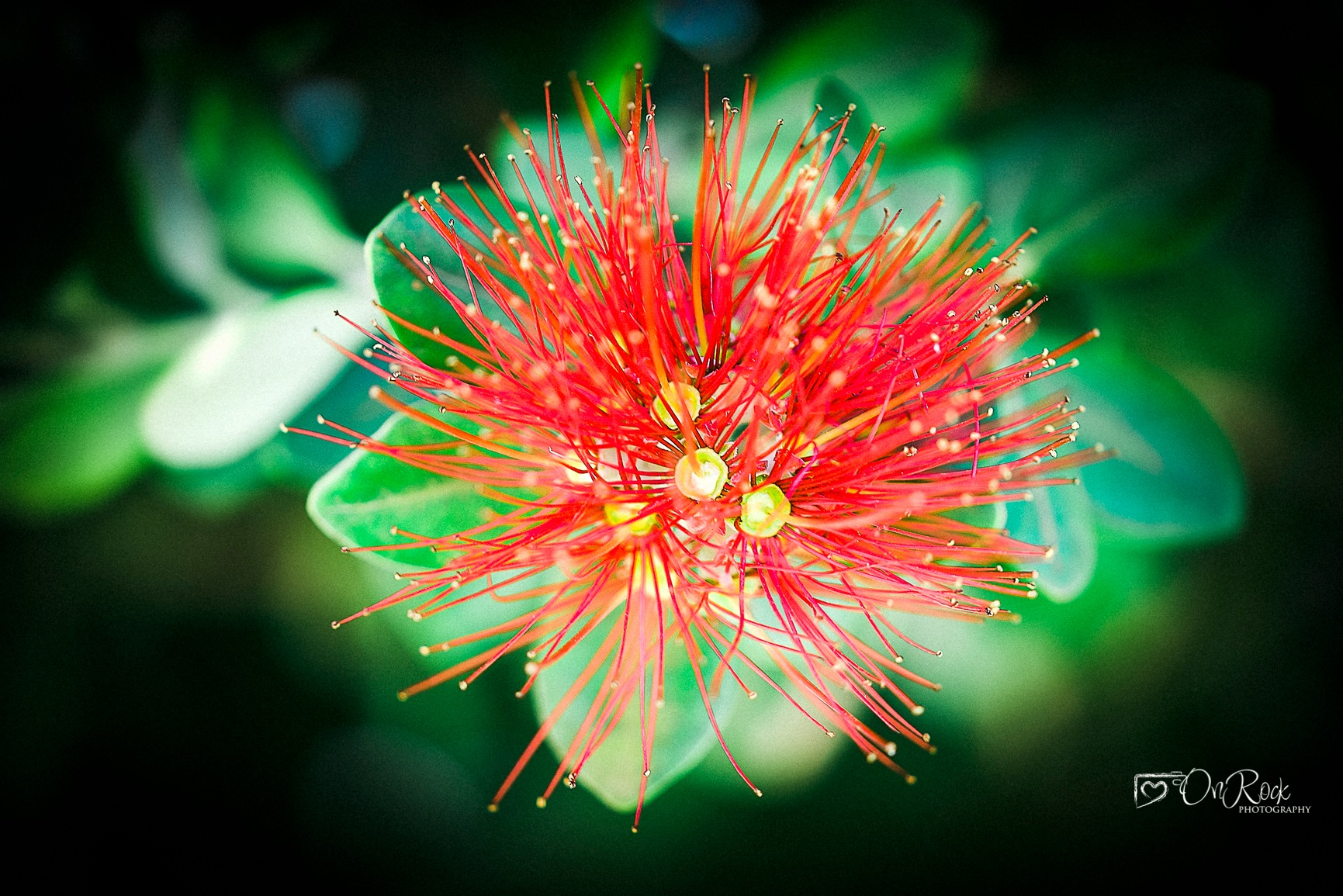 Flowers from my garden by OnRock Photography