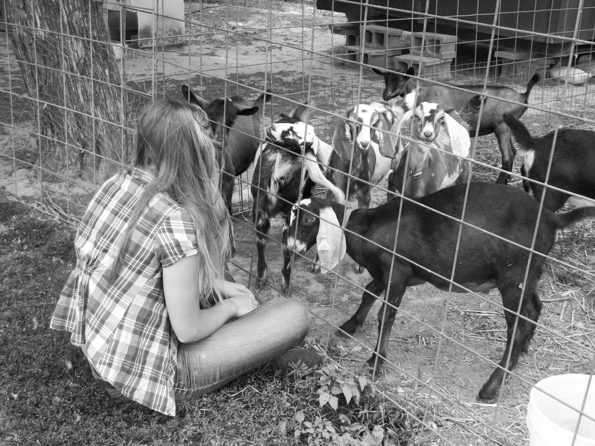 Girl with the Goats by Melanie