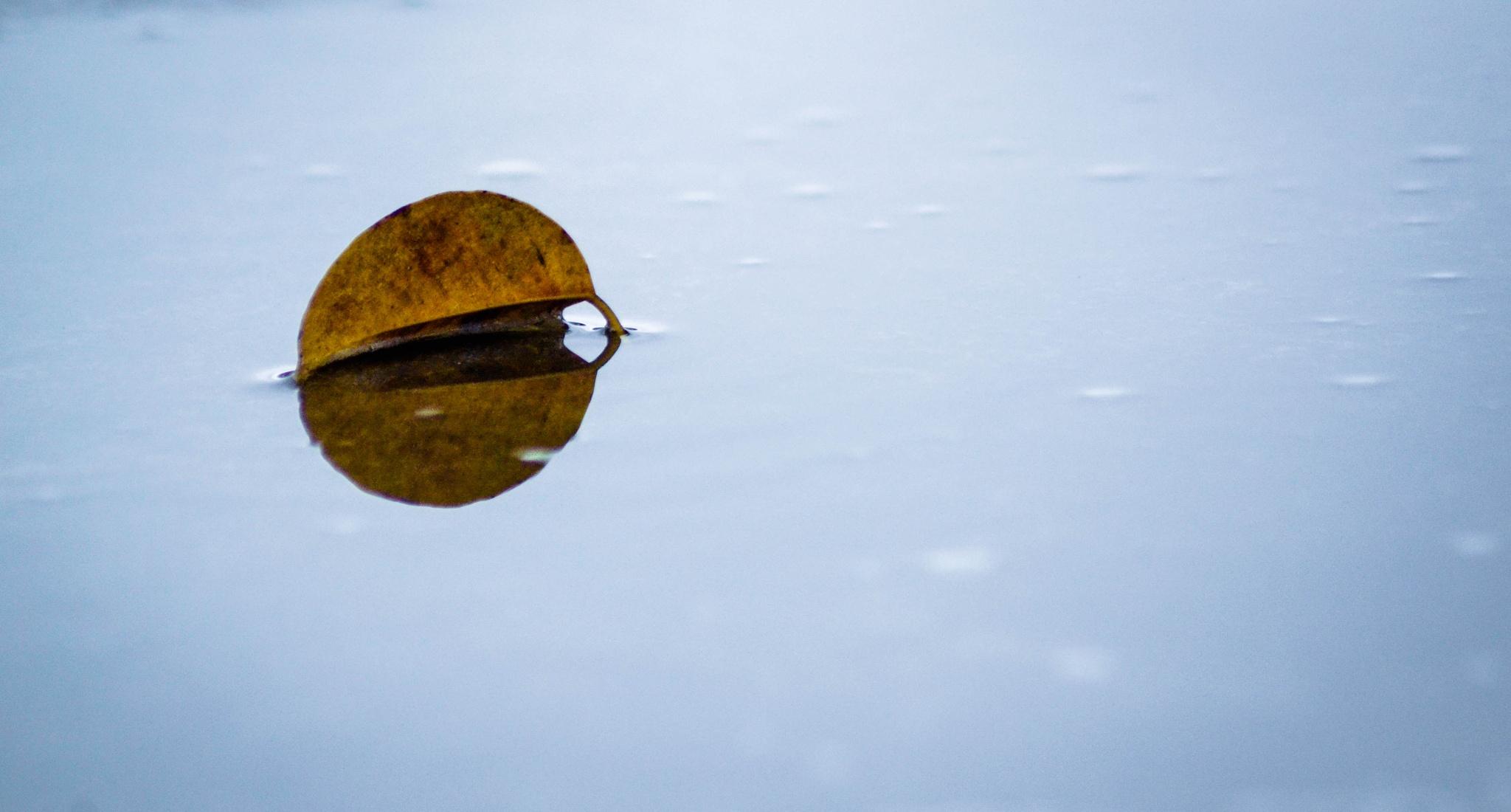 Leaf by Prime Tamid-ay