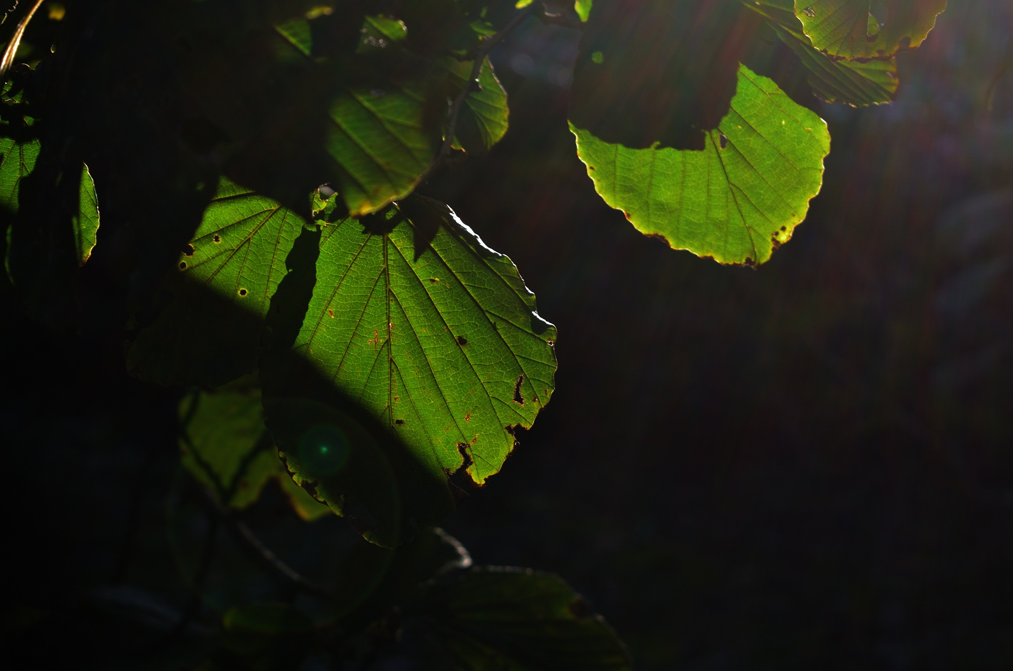 Light on by Masahiro  Asano