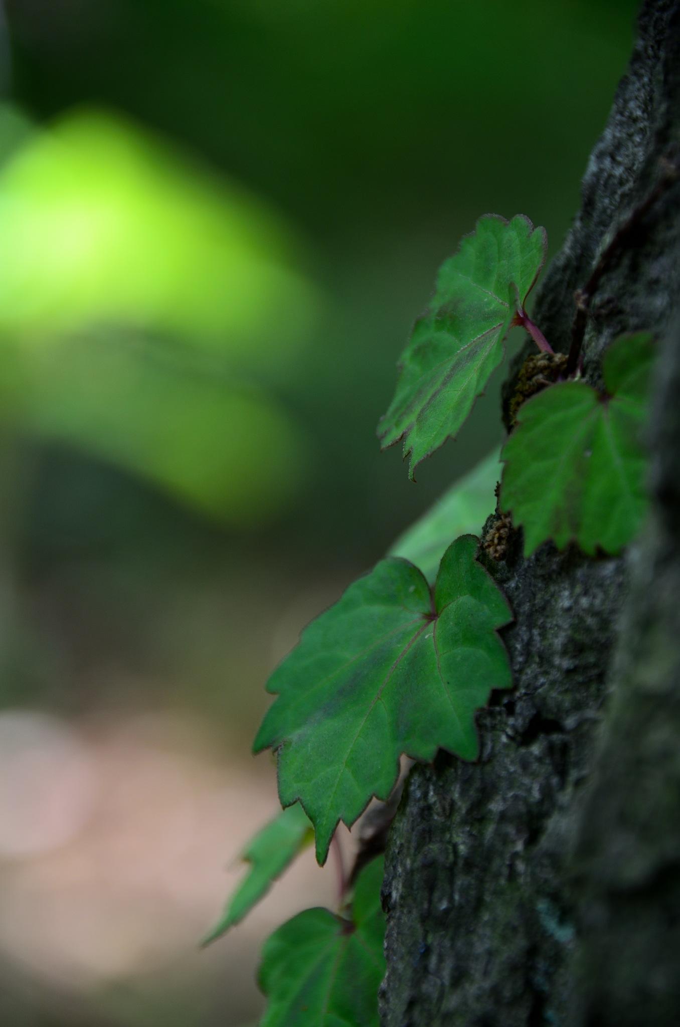 green by Masahiro  Asano