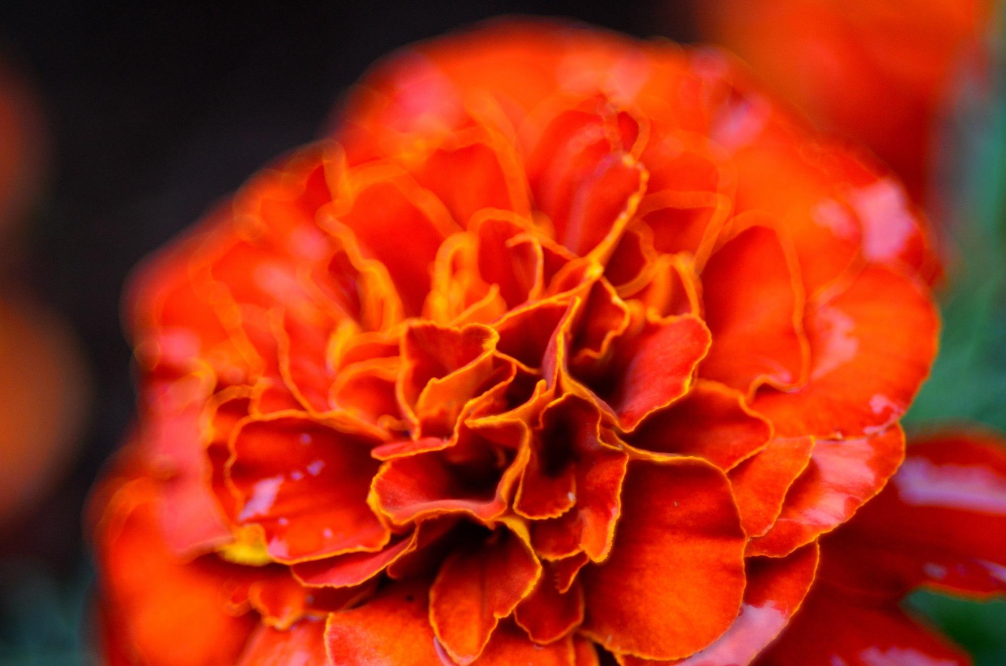 orange by Masahiro  Asano