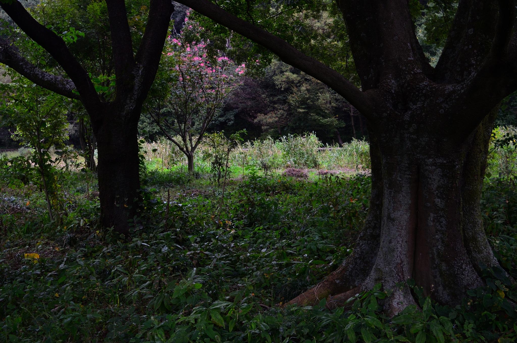 Trees in the park by Masahiro  Asano