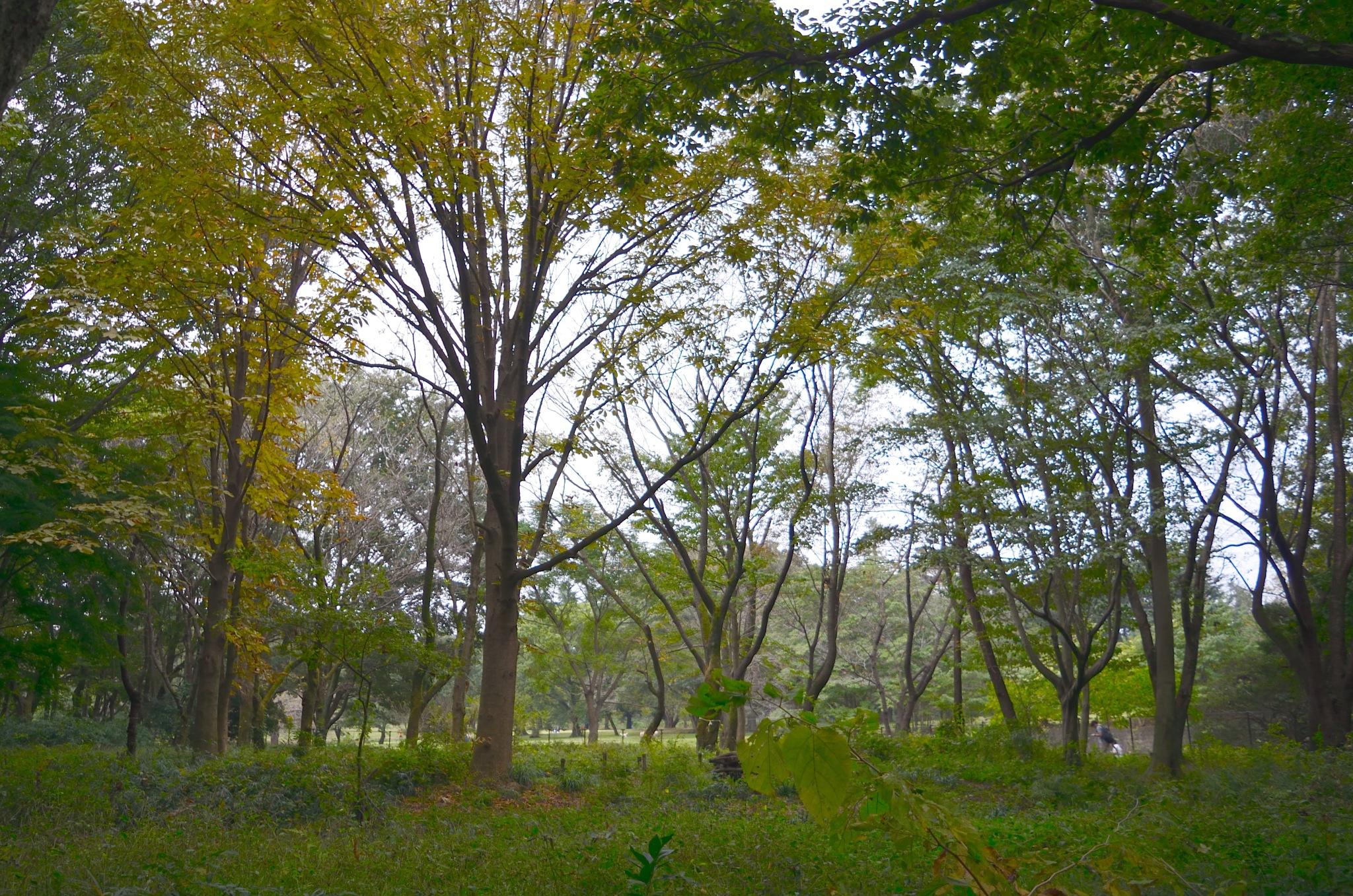 woods by Masahiro  Asano