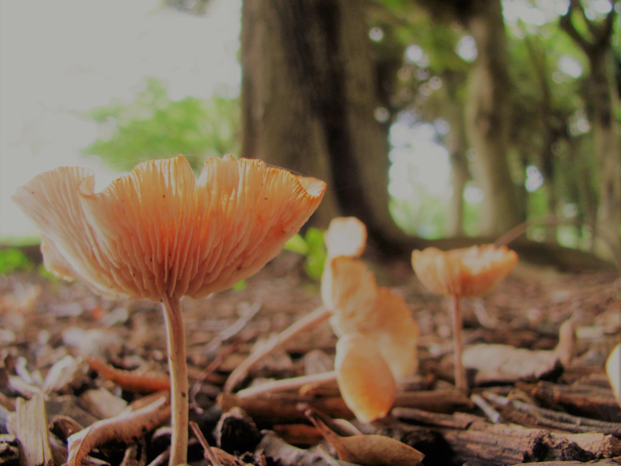 mushrooms in the park by Masahiro  Asano