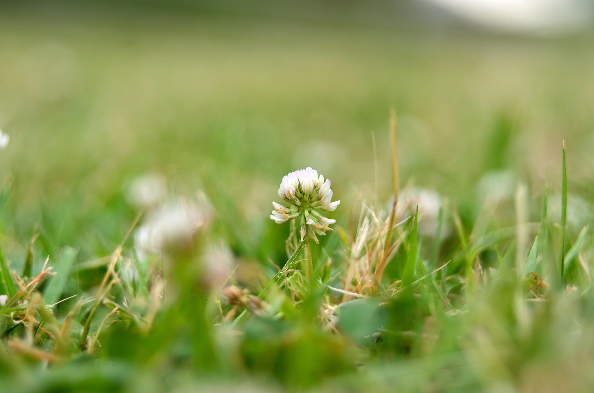 clover by Masahiro  Asano