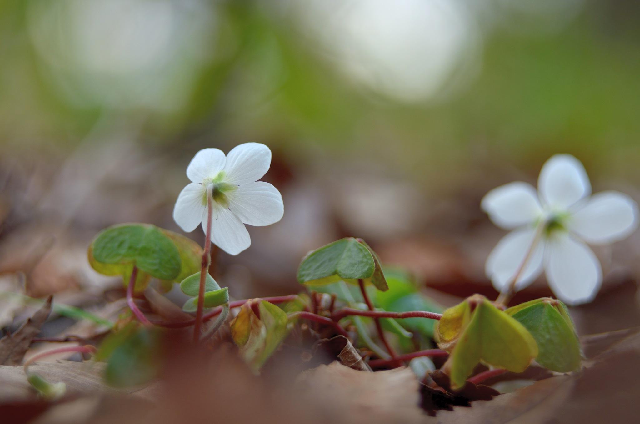 spring foresto by Masahiro  Asano