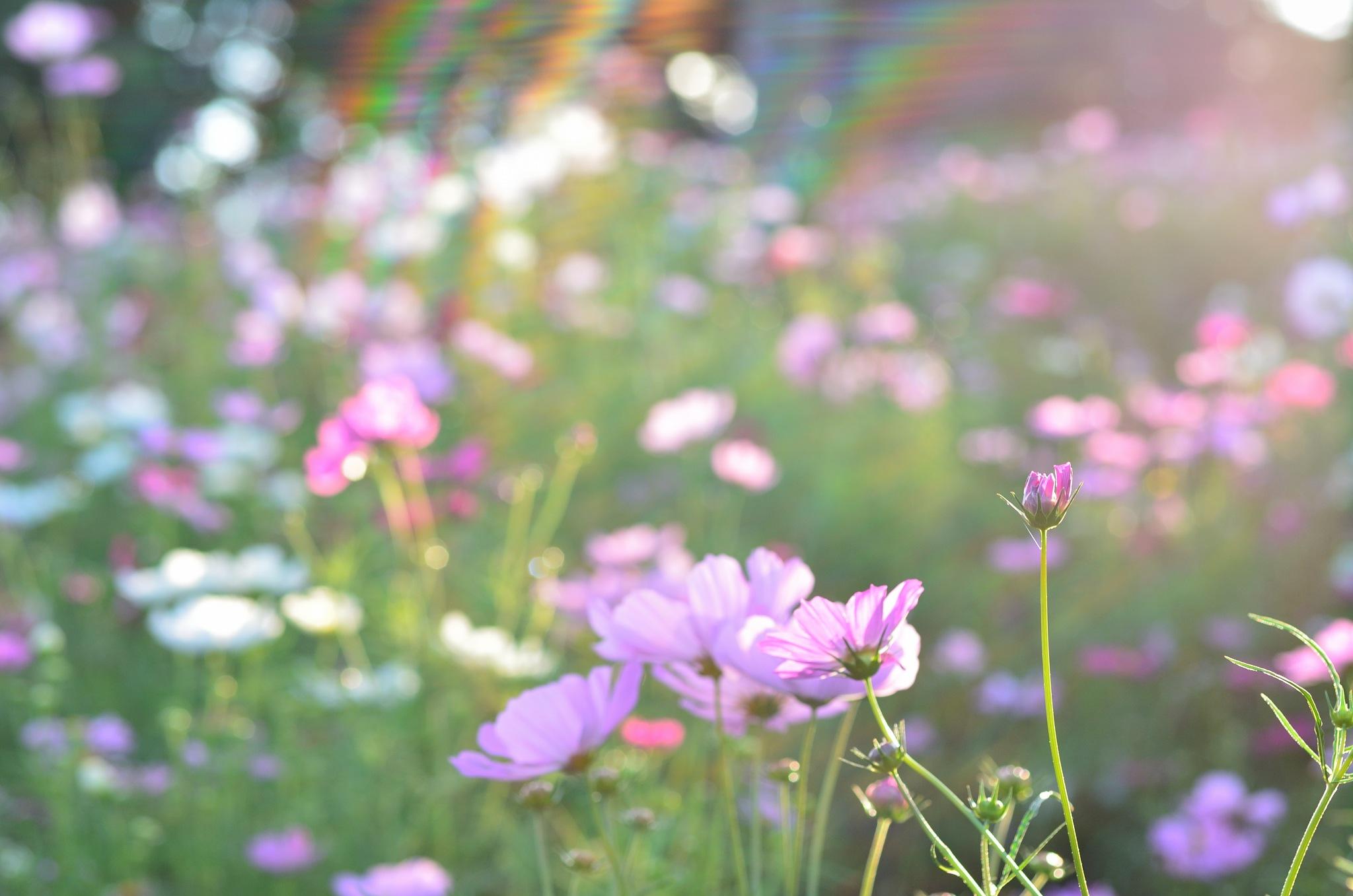 Rainbow ! by Masahiro  Asano