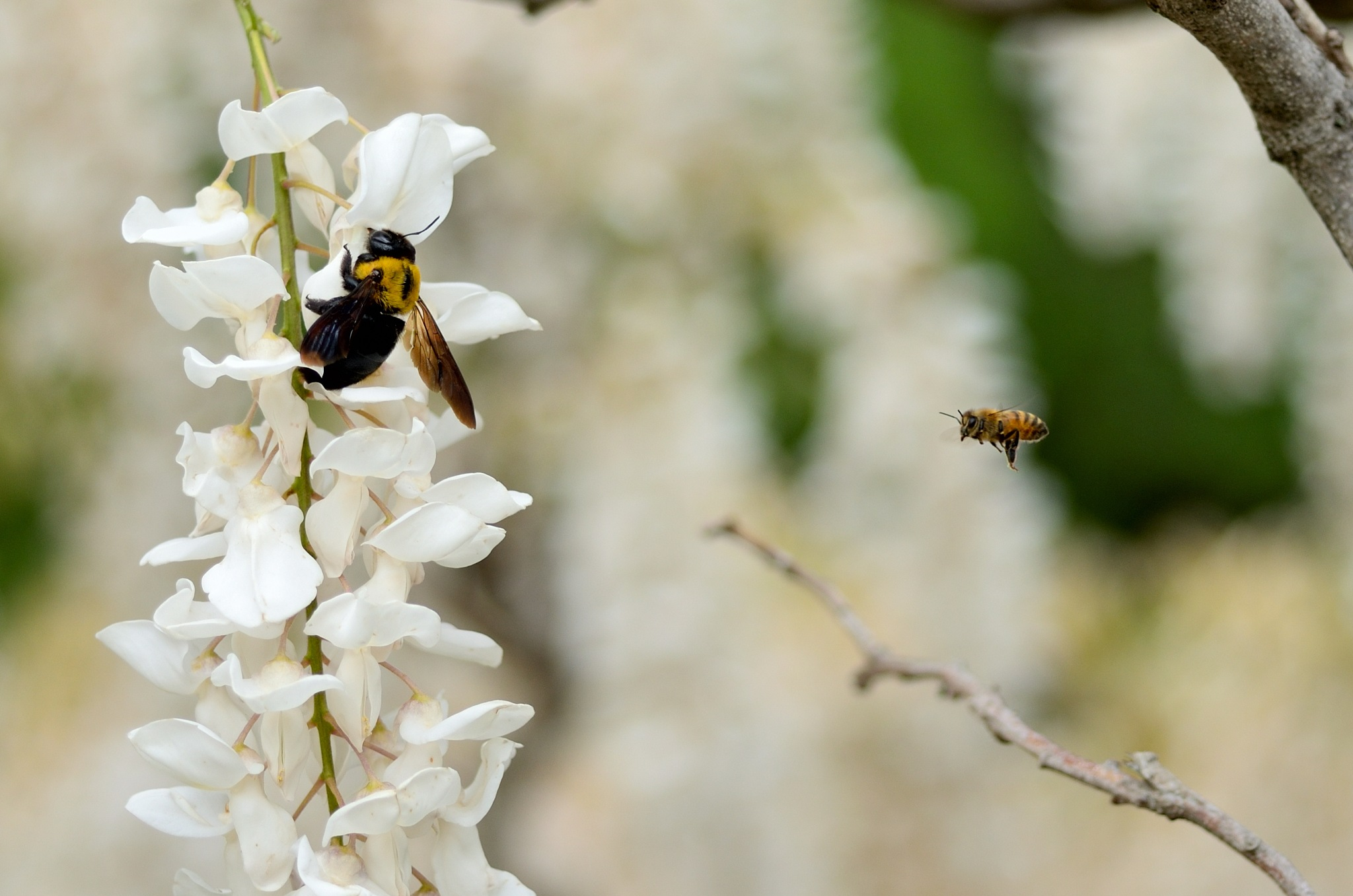 Bee and Bee by Masahiro  Asano