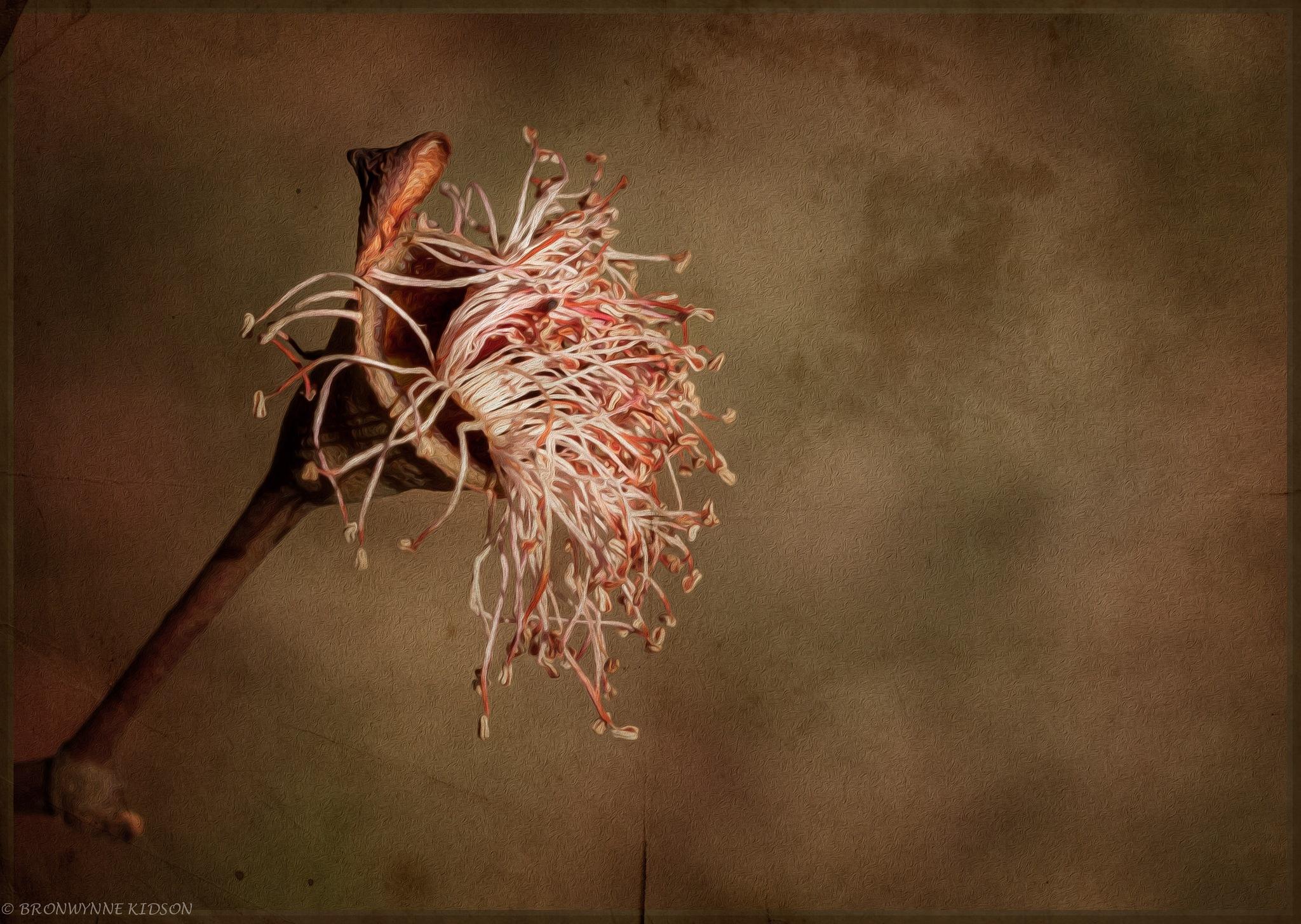 Dying Gum Flower by Bronwynne Kidson