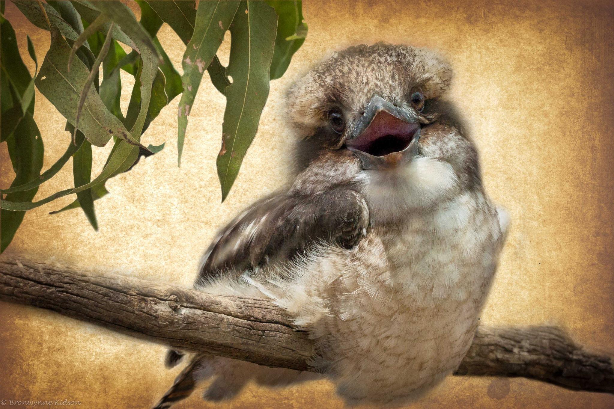 Kookaburra Laugh by Bronwynne Kidson