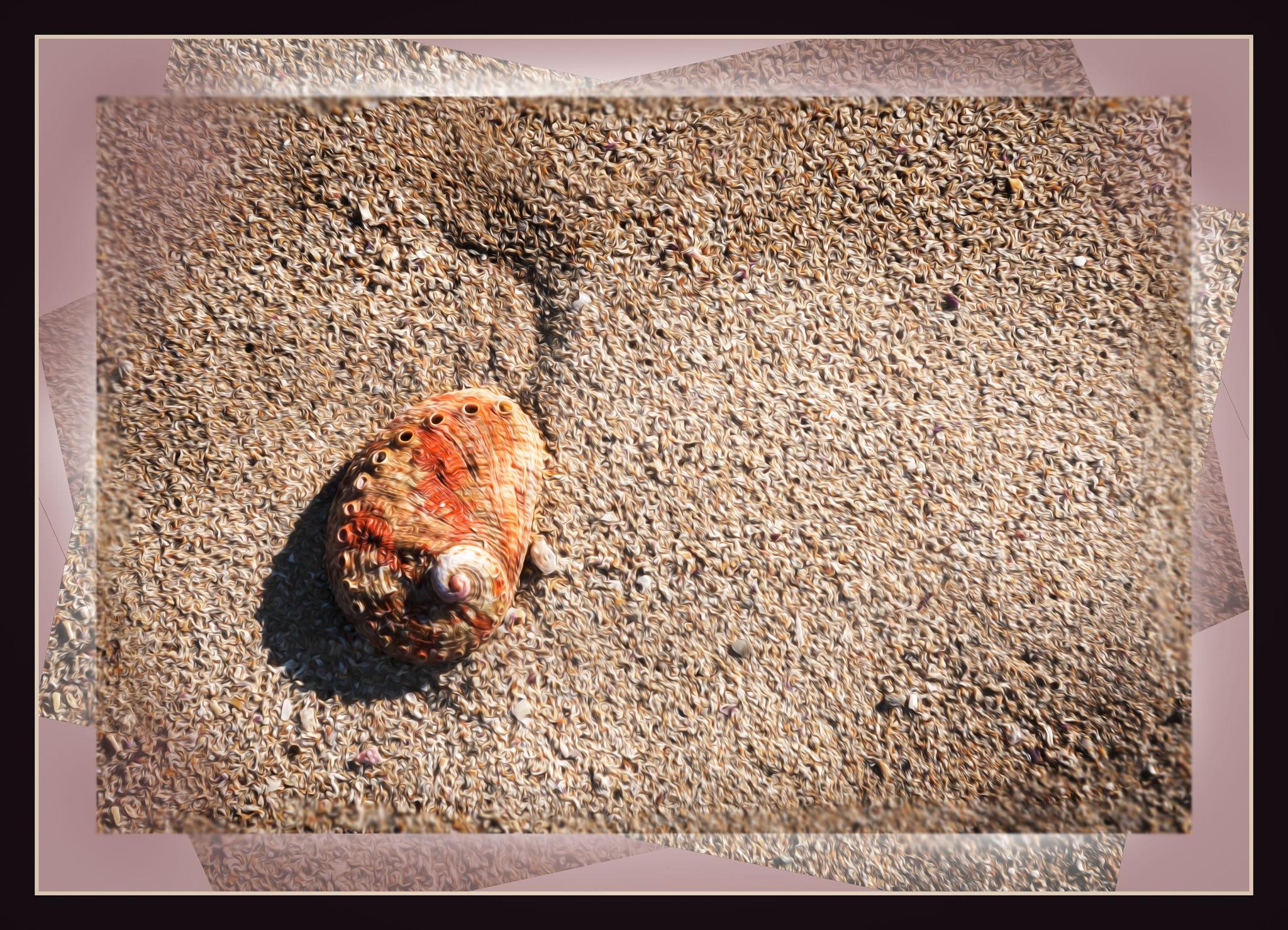 Shell by Bronwynne Kidson