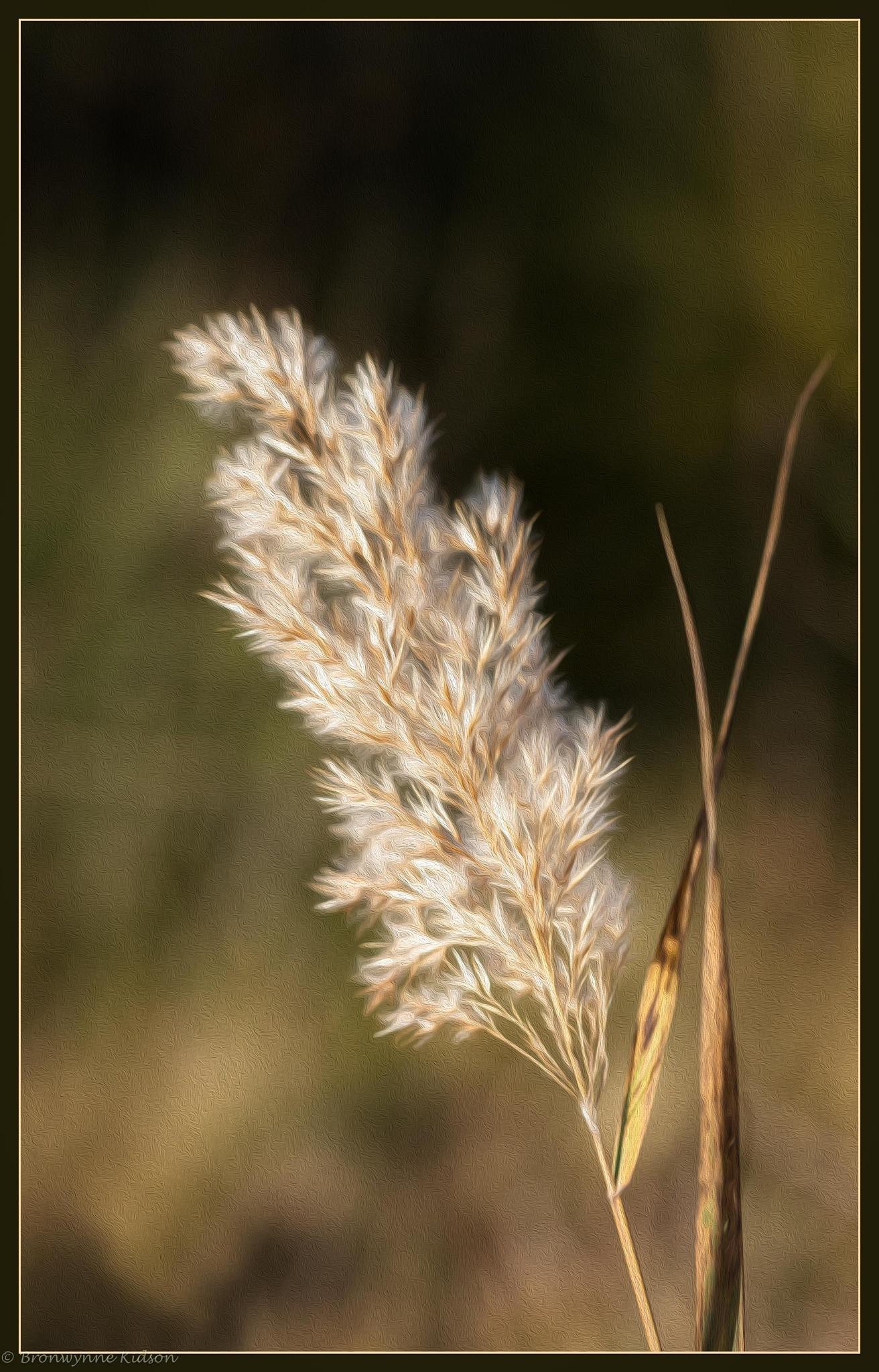 Reed by Bronwynne Kidson