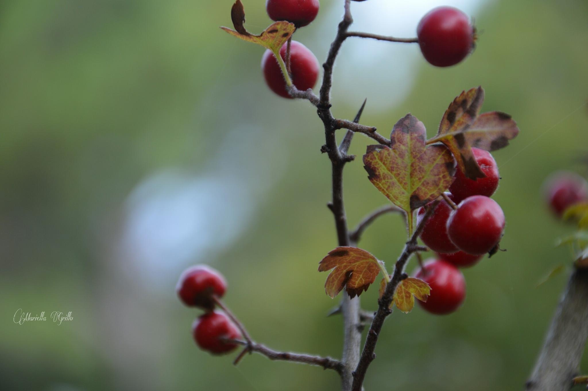 Autumn by Mariella Grillo