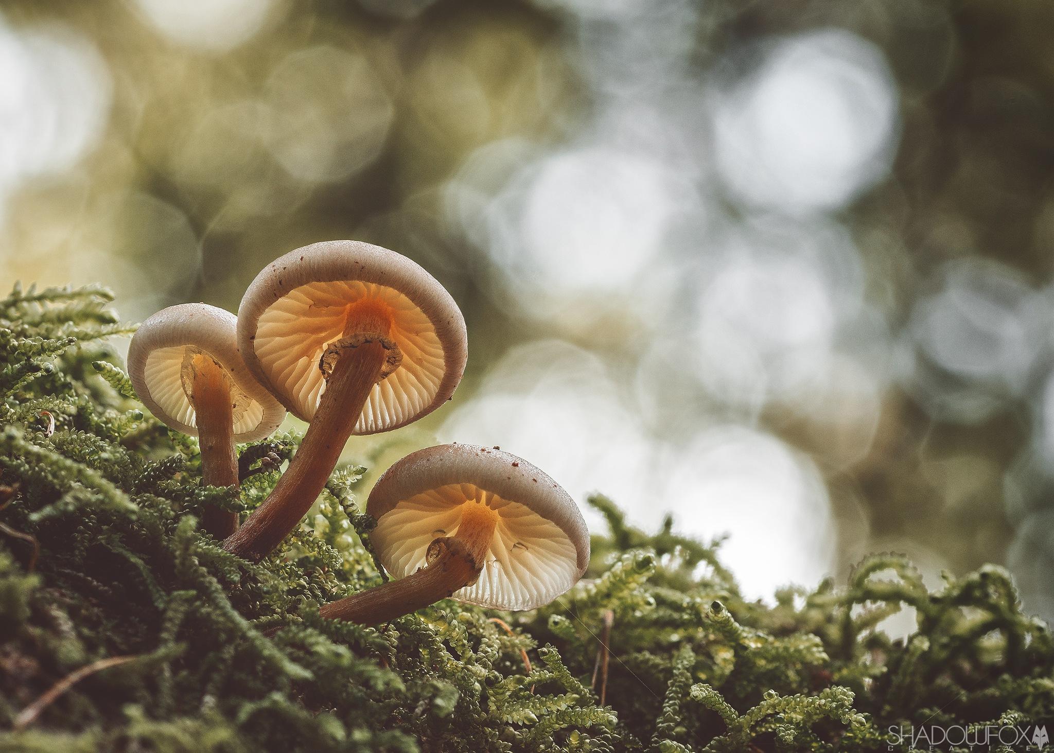 Fungi 2018-24 by Mark Fox