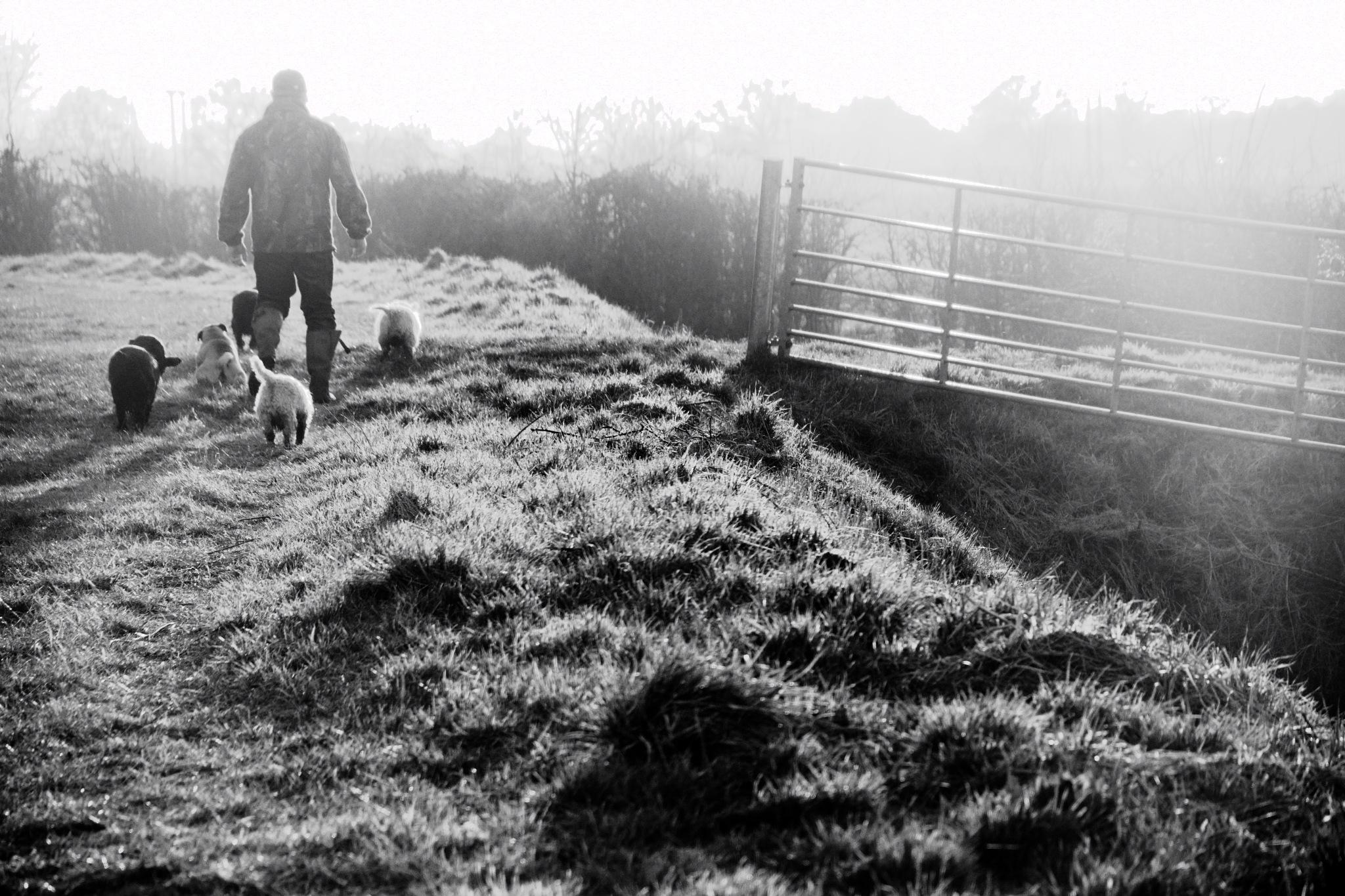 walk in the mist by Ian Alastair Trenor Photography