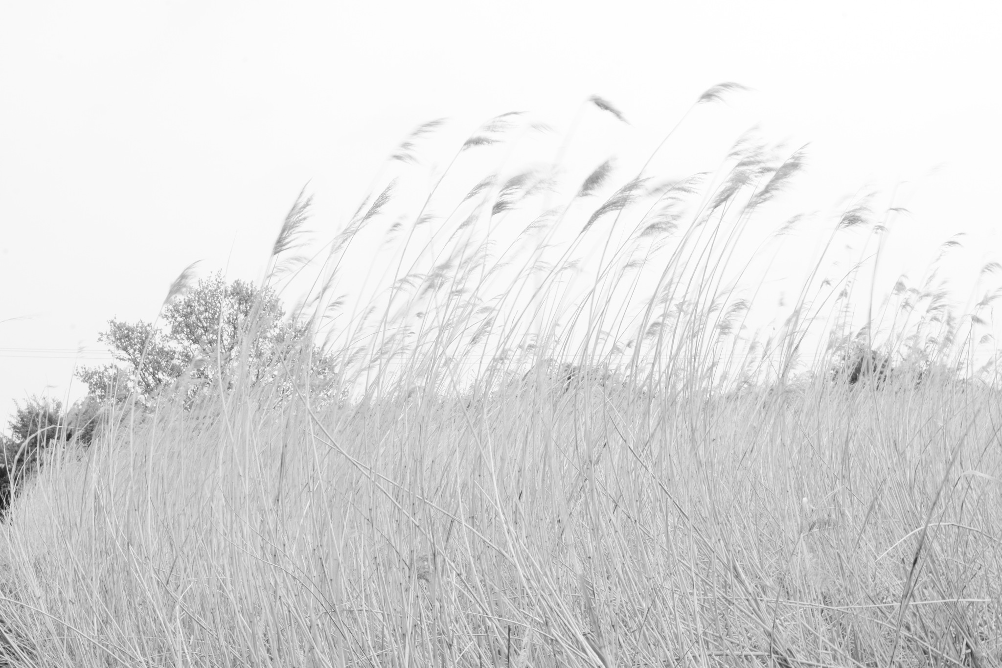 wiNd gRaSS by Ian Alastair Trenor Photography