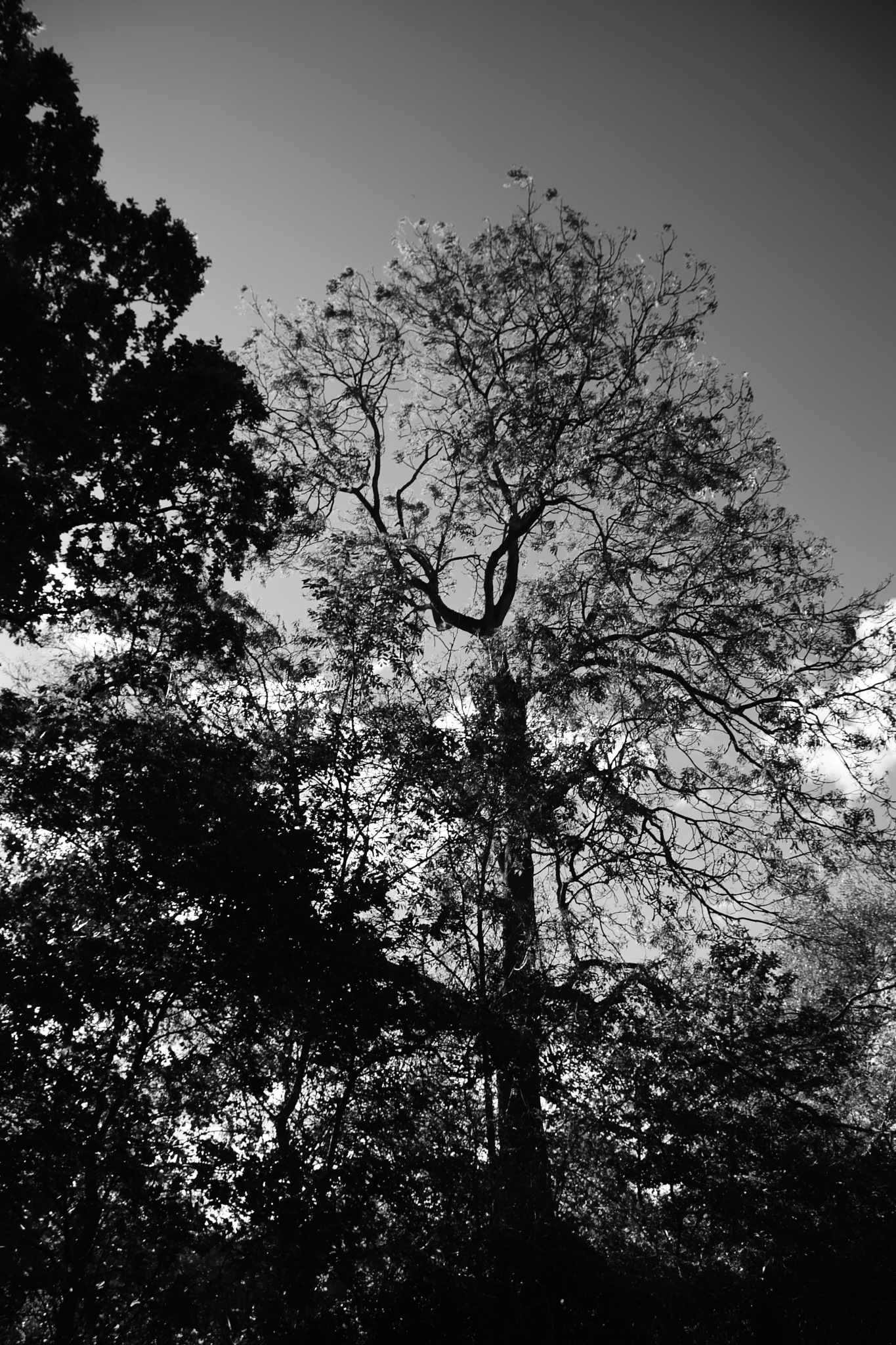 aFtErnOOn trEE linE by Ian Alastair Trenor Photography