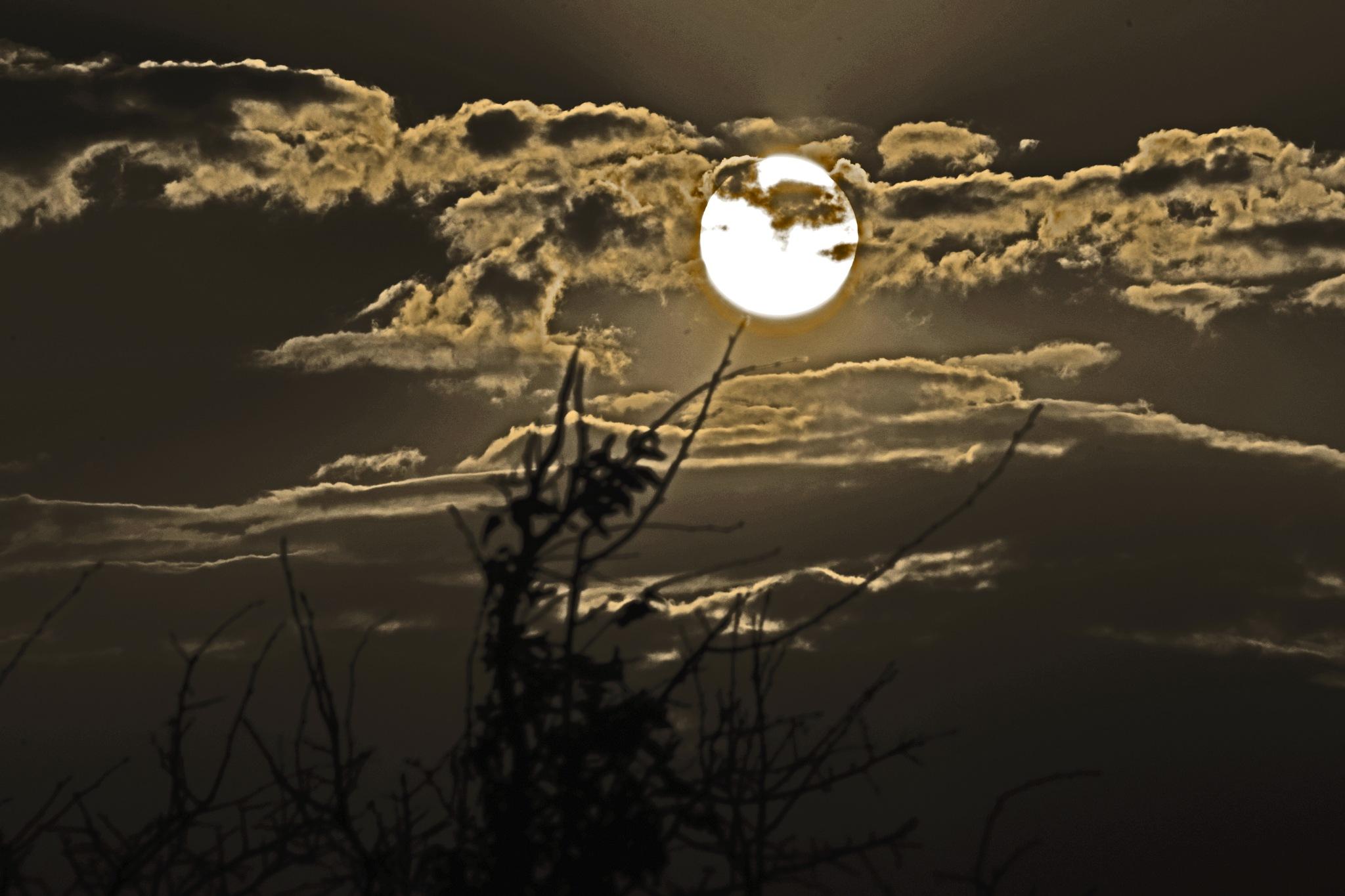 sunlight by Ian Alastair Trenor Photography