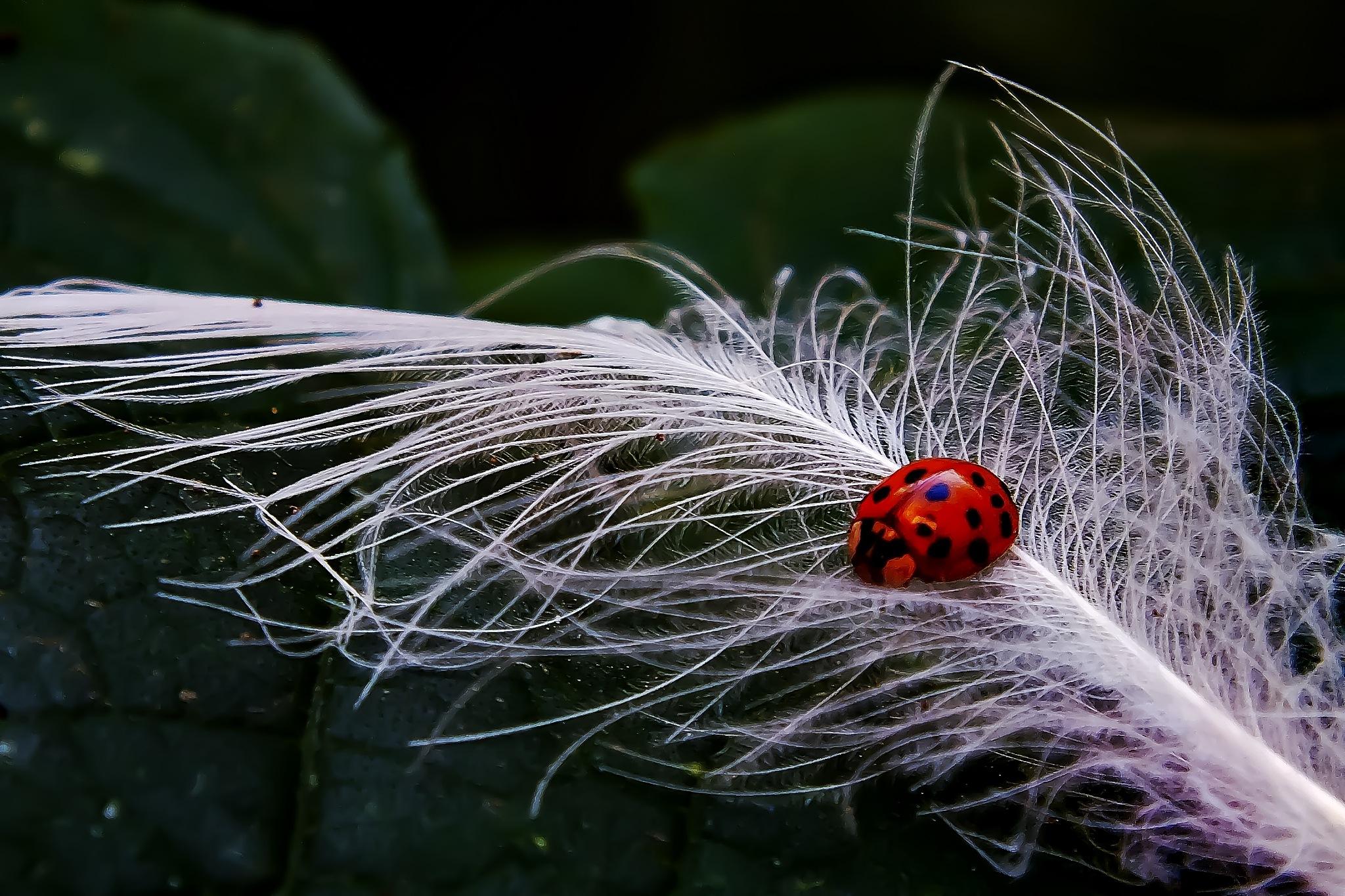 The Ladybug by Arda Erlik