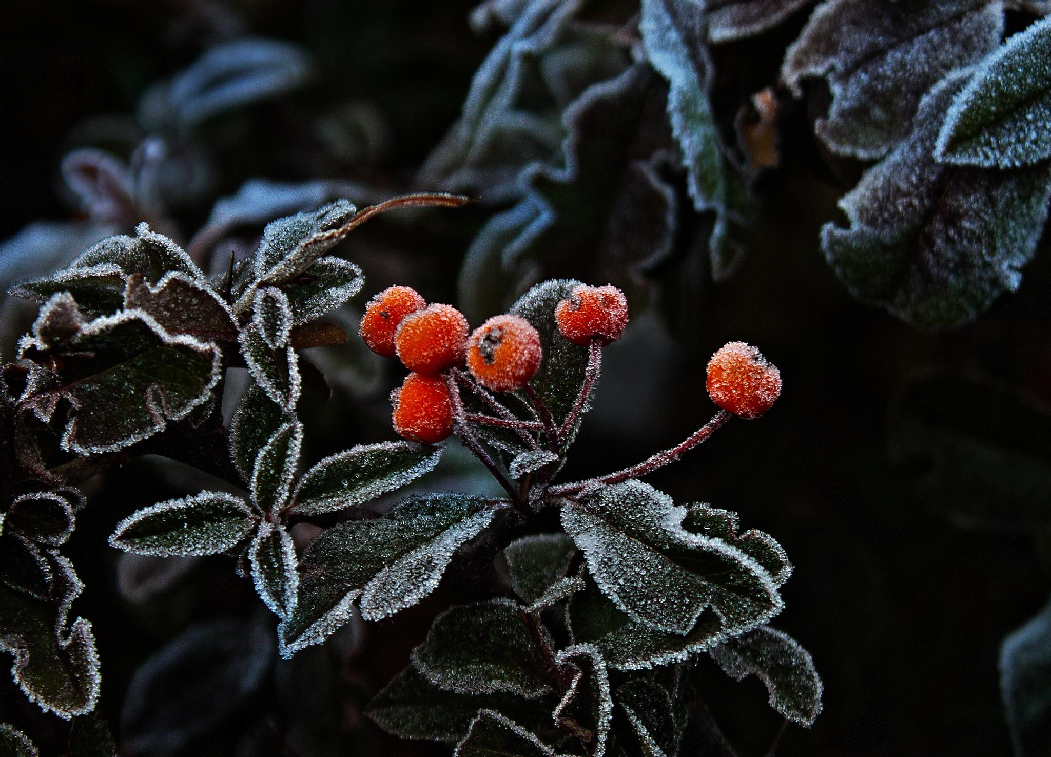 The frost - delicate breath of winter by Valentina Yotova-Todorova
