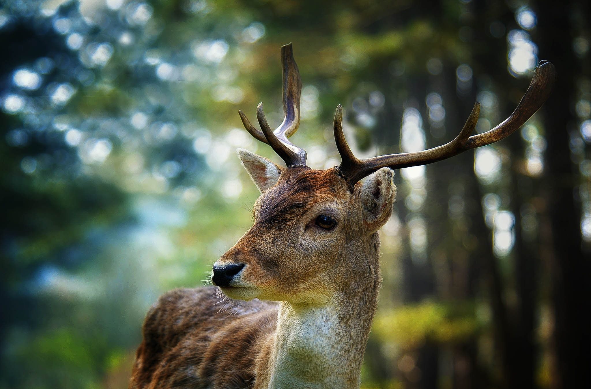 Oh deer by Boukes