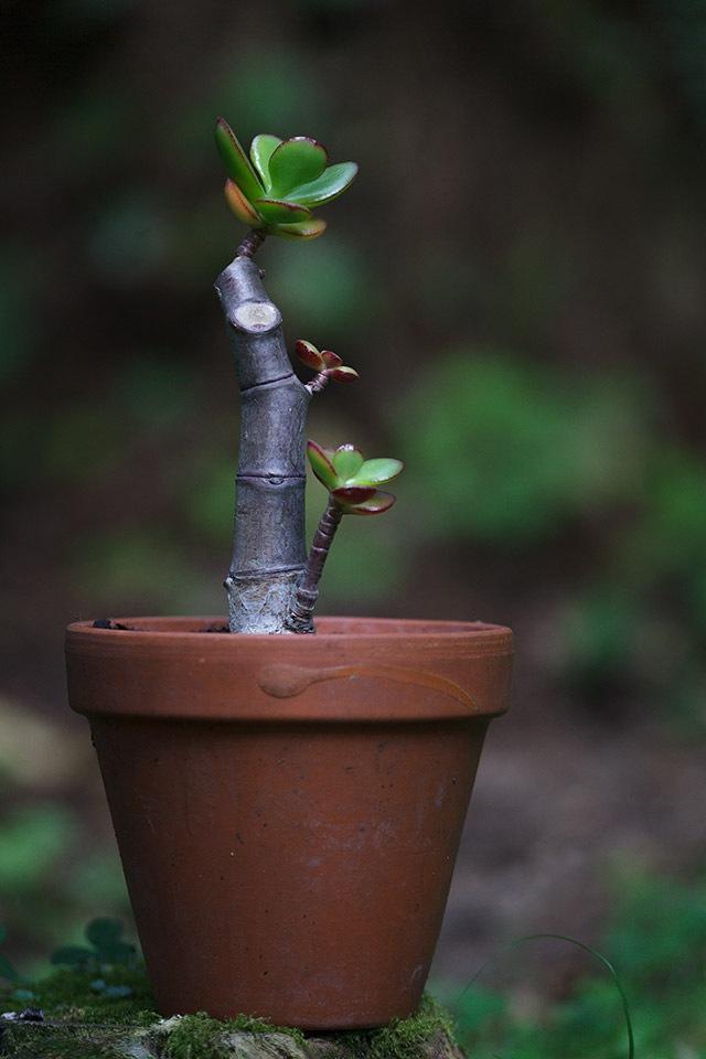 A small succulent by JosVanDeLaar