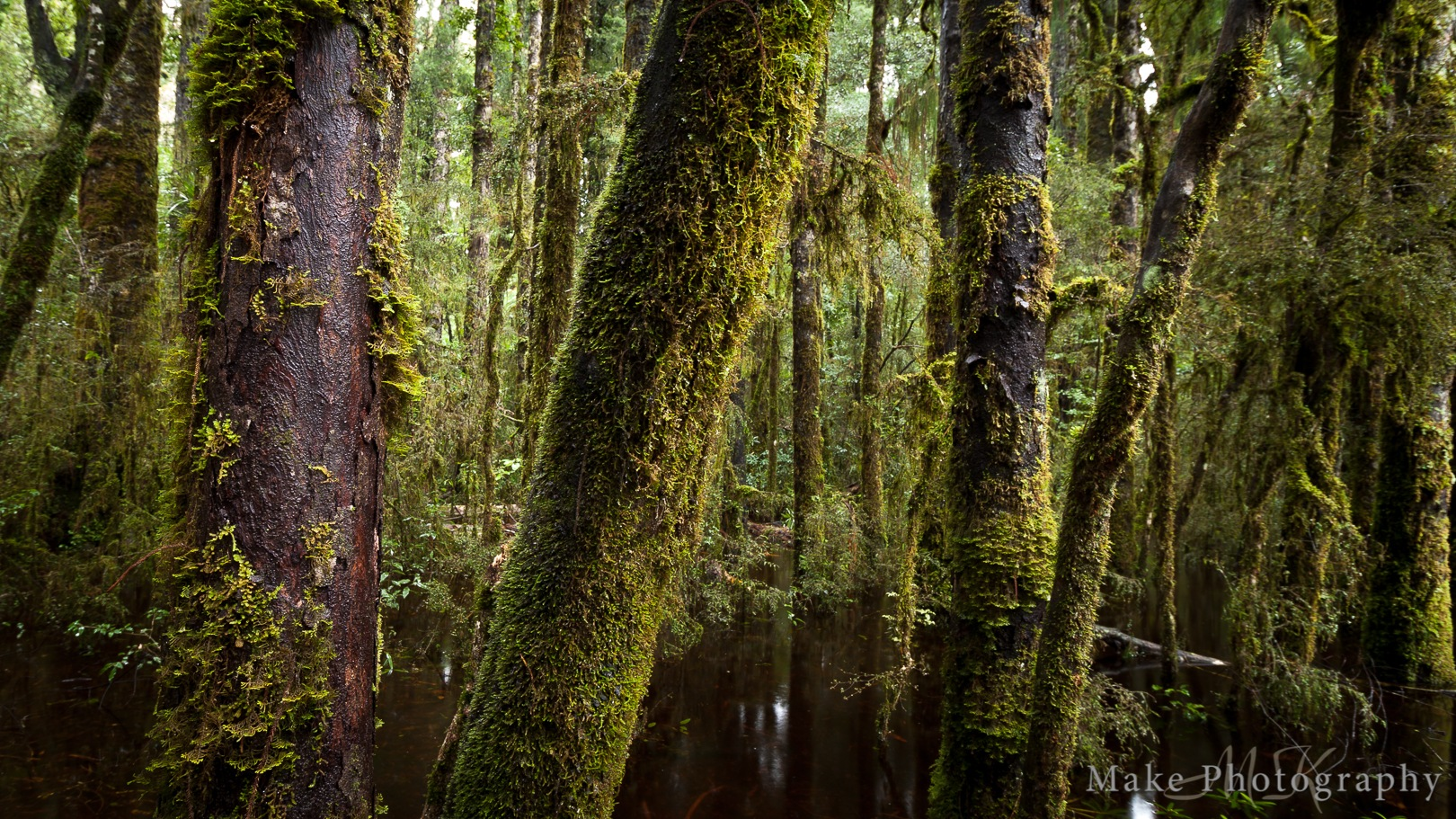 New Zealand Forest by MikeGannaway